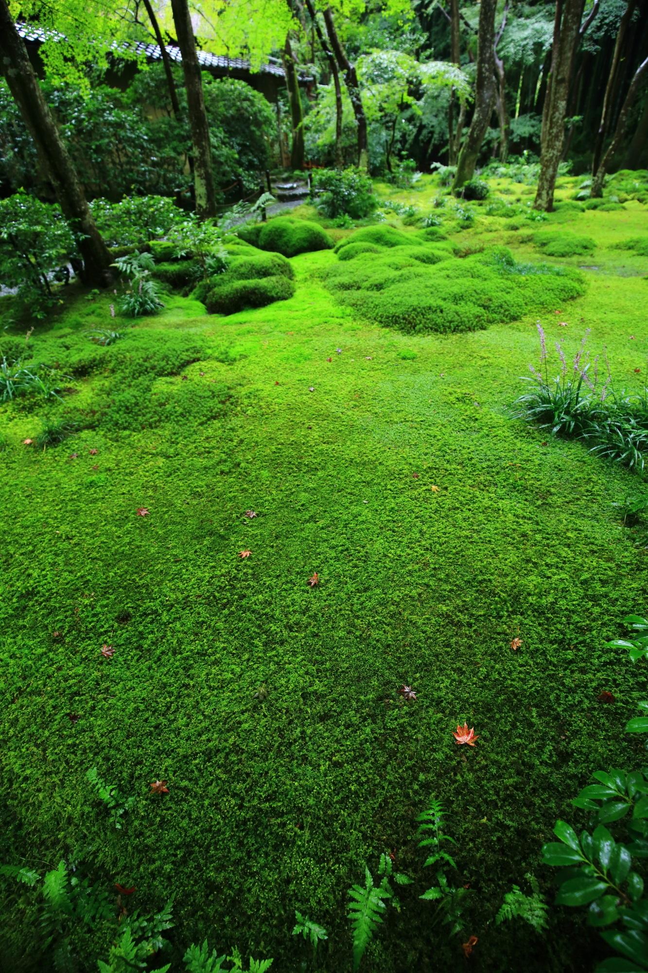 広がる美しすぎる極上の緑