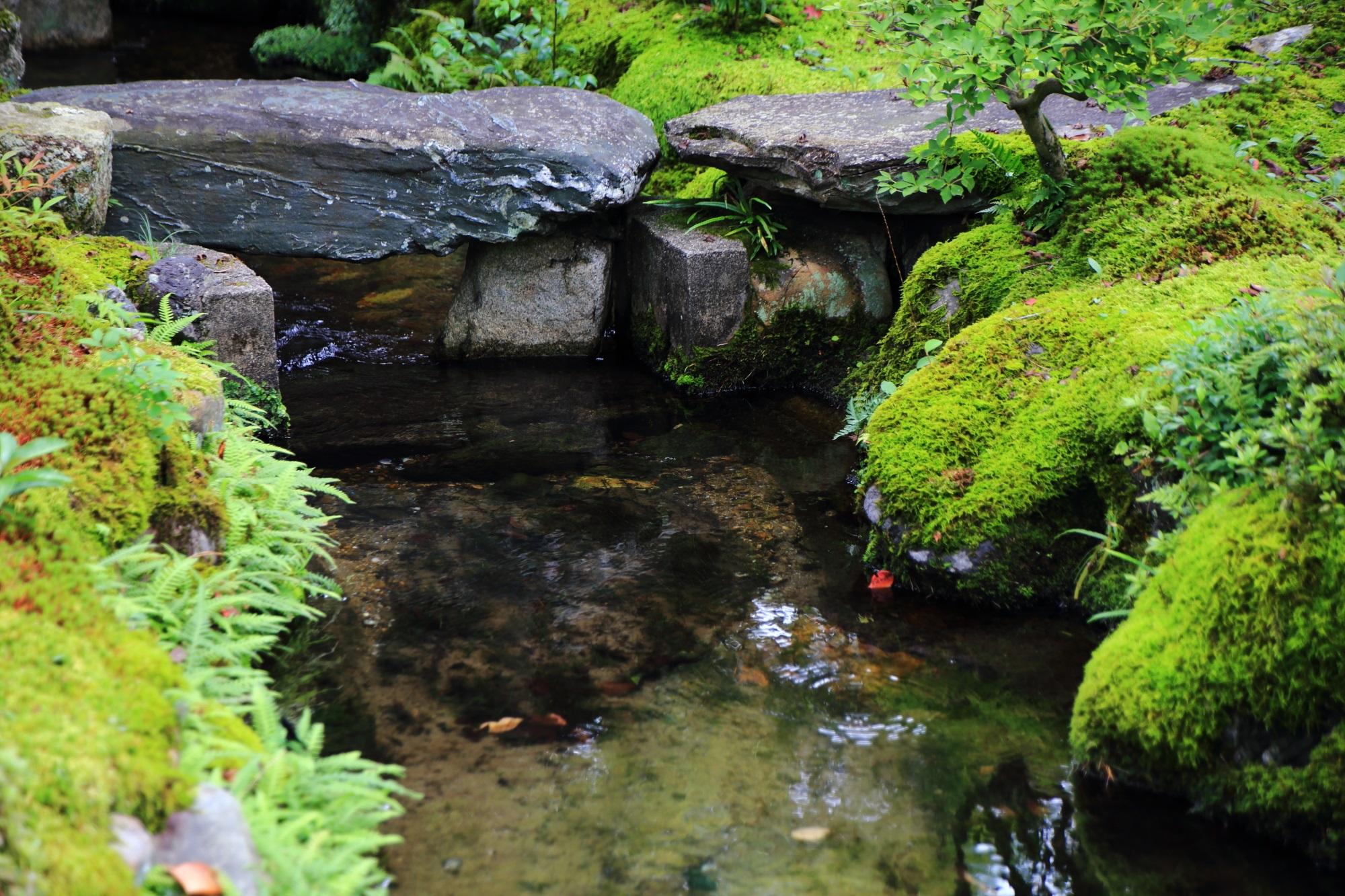 南禅寺大寧軒の池と緑の苔