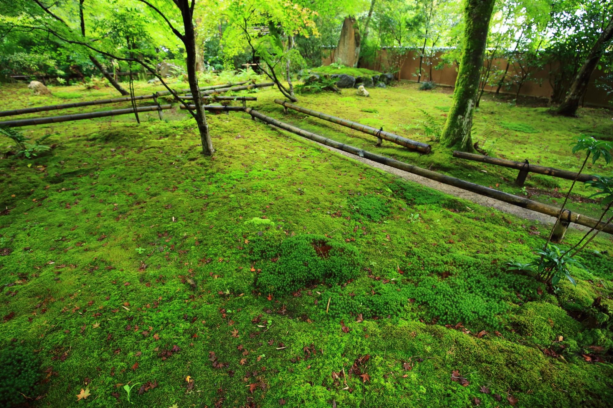 苔庭の一面の苔