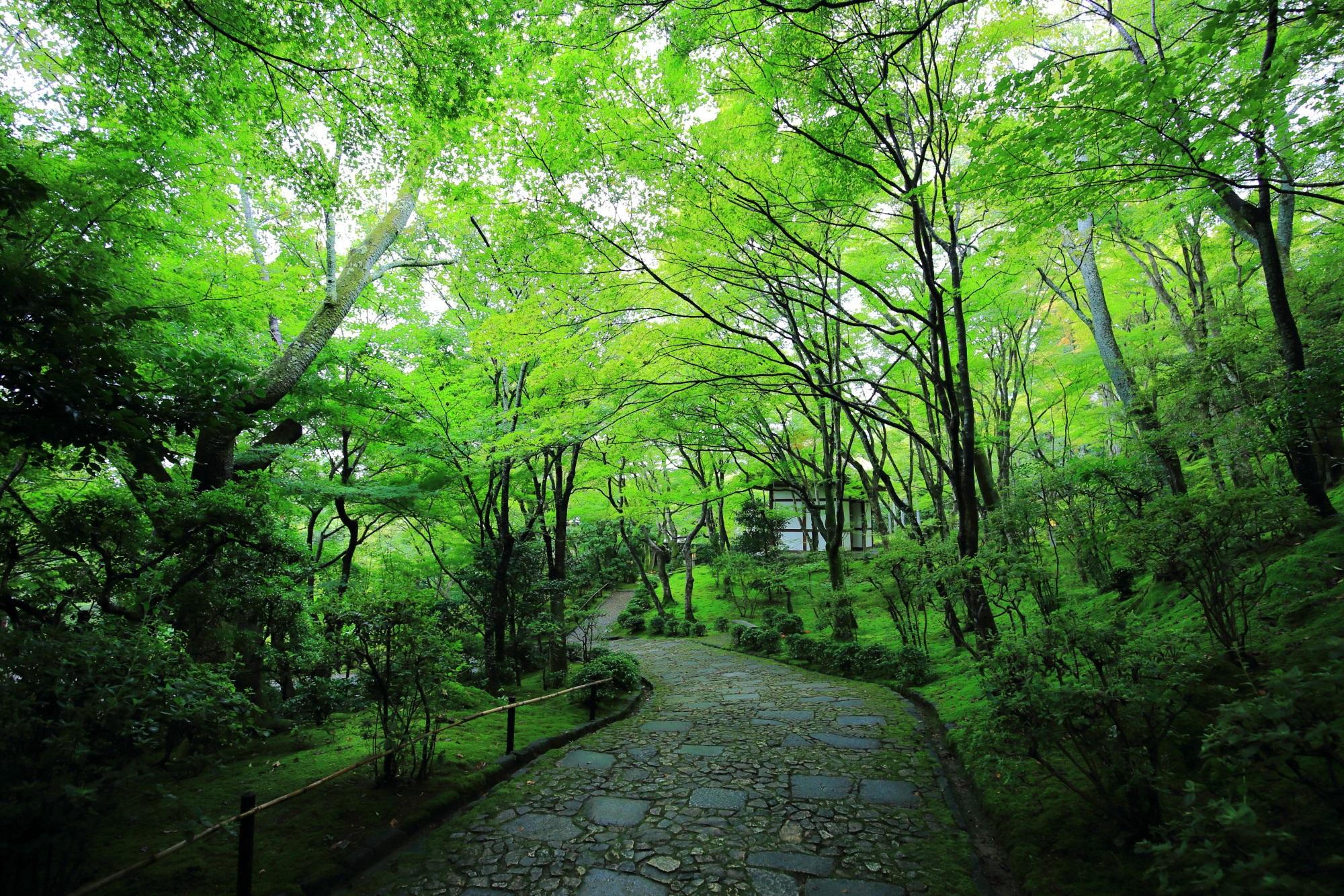 じょうじゃっこうじの仁王門へ続く参道と苔と青もみじ
