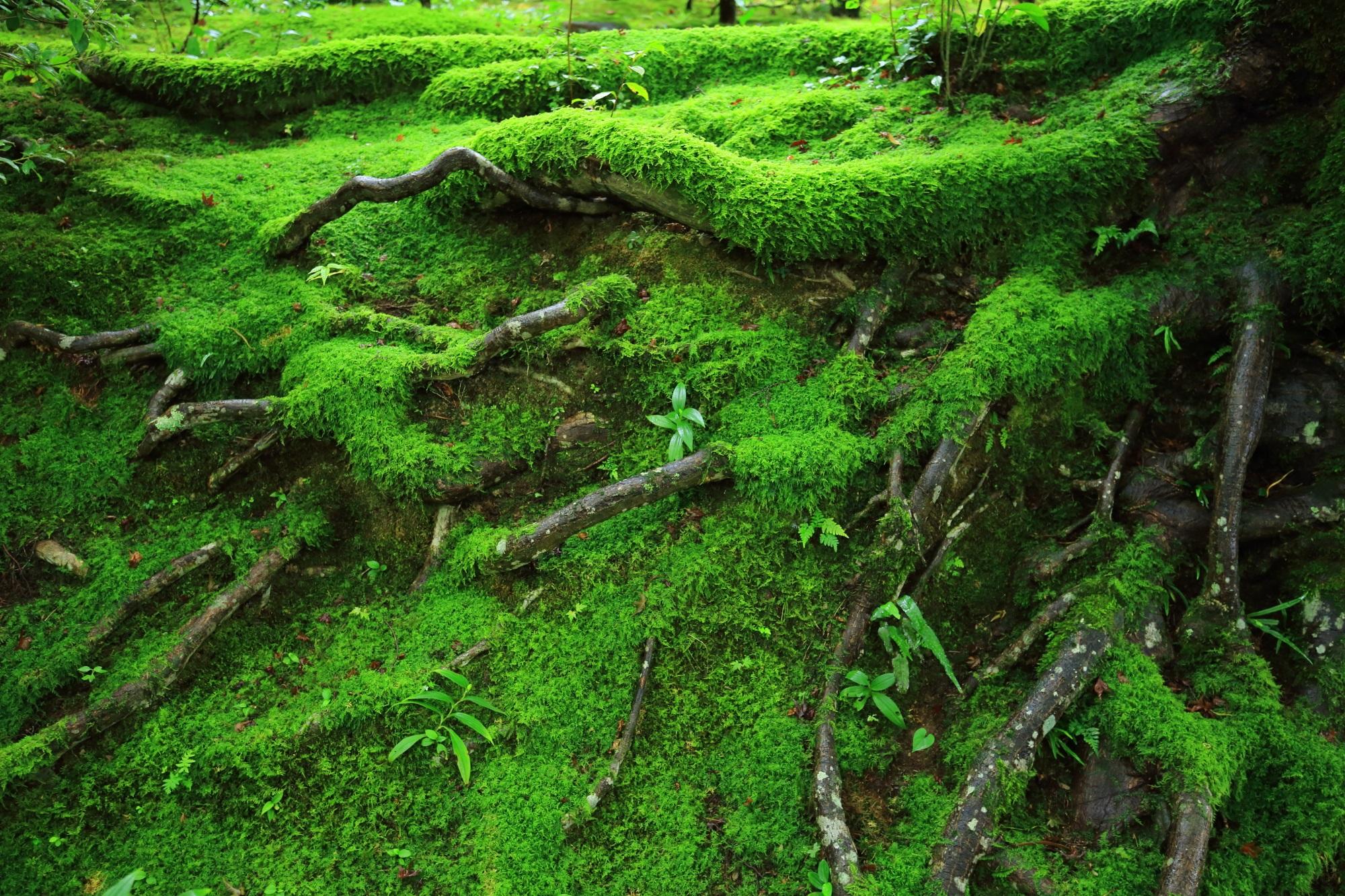 仁王門前の綺麗な苔