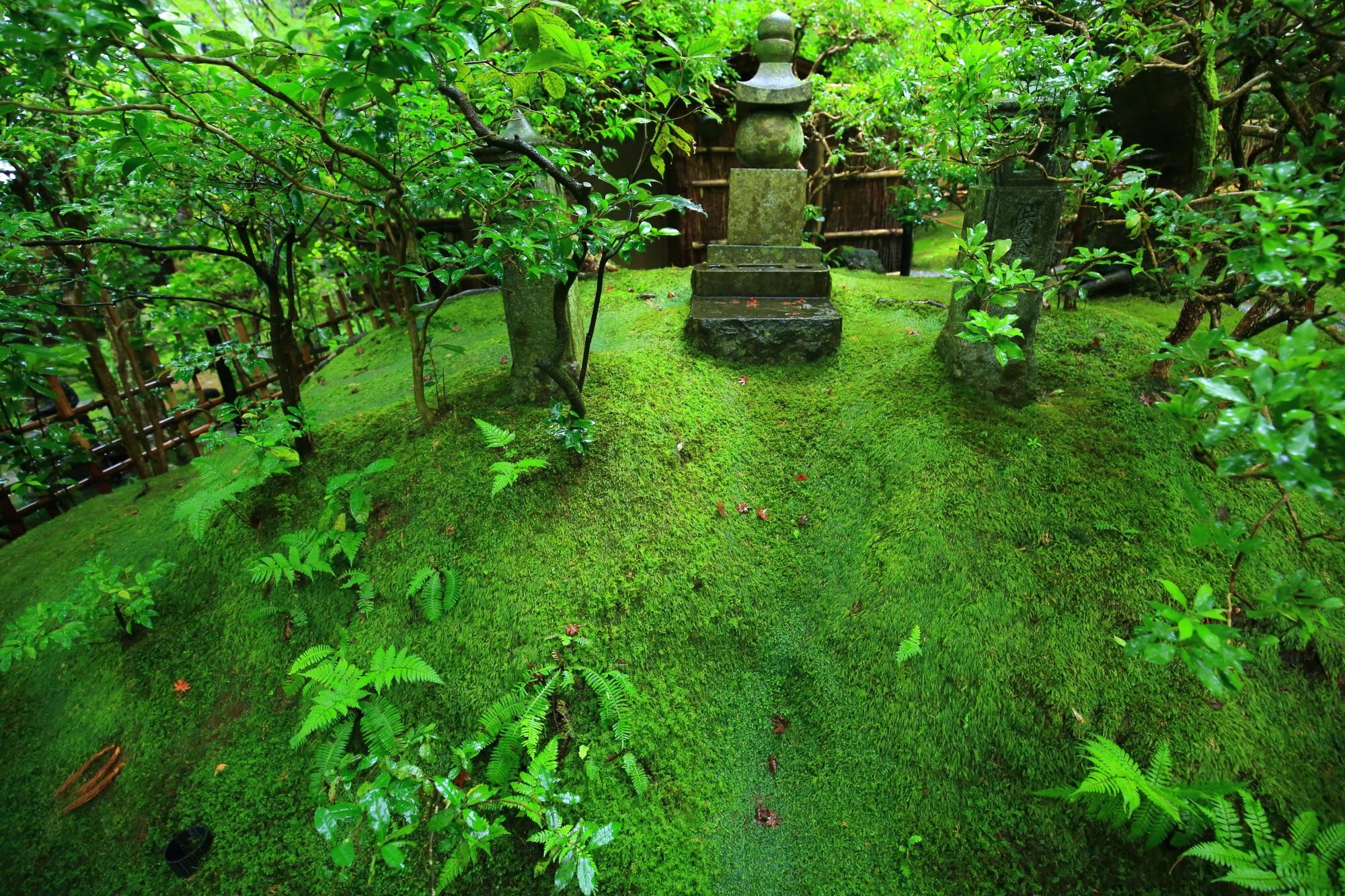 見事な苔や緑に佇む石碑(石塔)