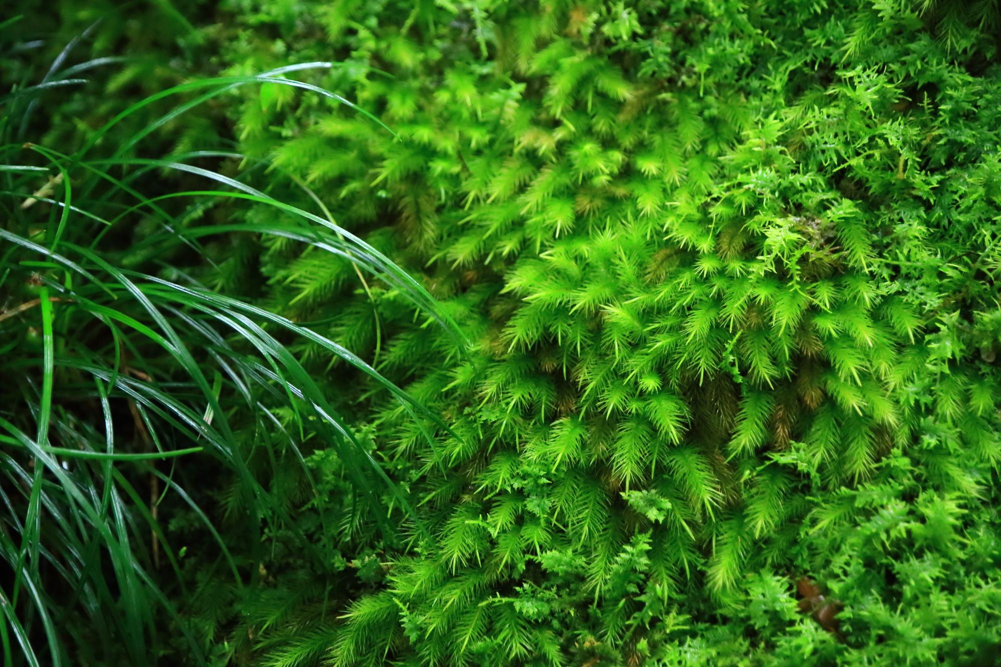 多彩多様な緑の溢れる庭園