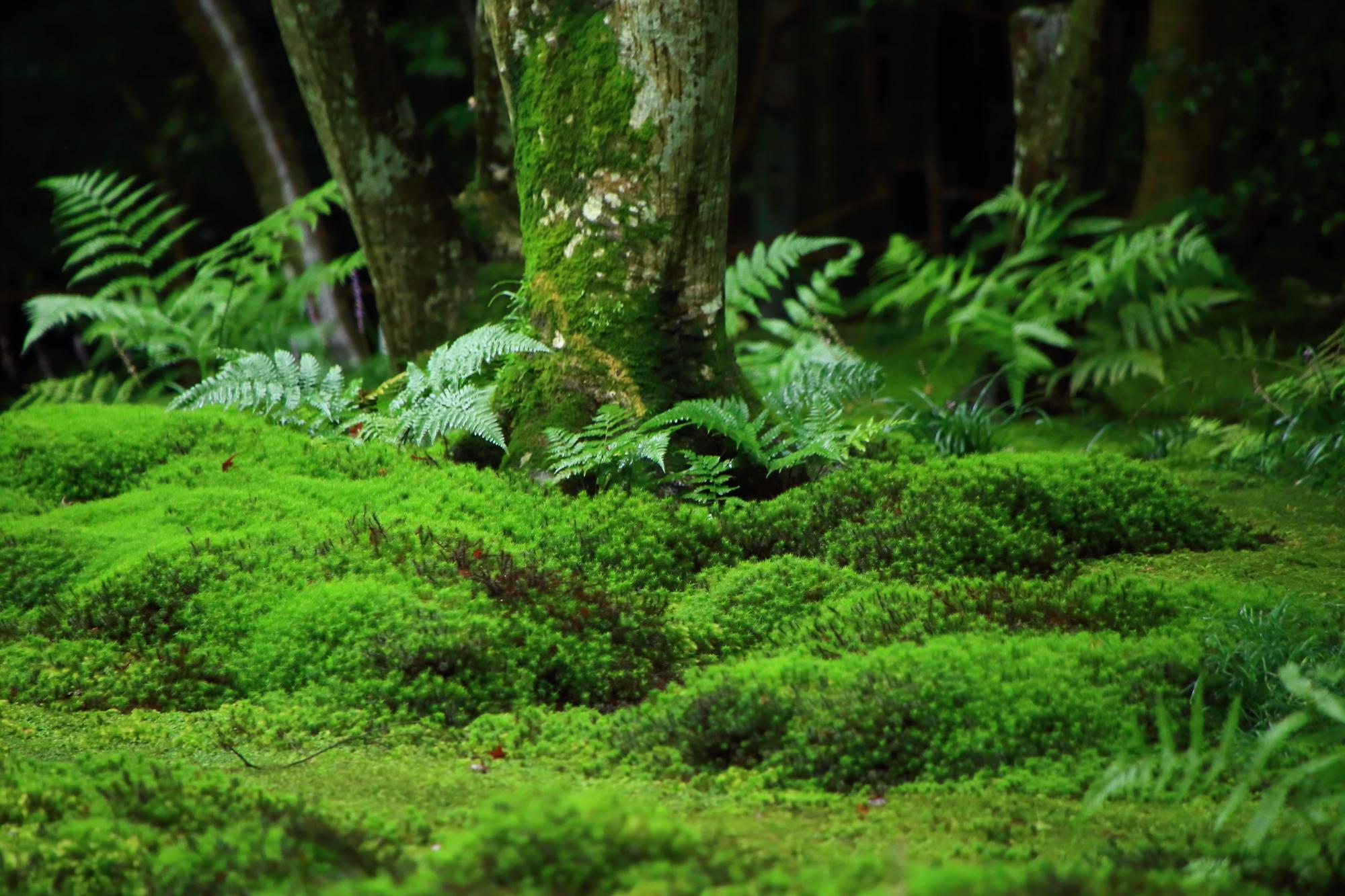 木にも育つ緑の苔