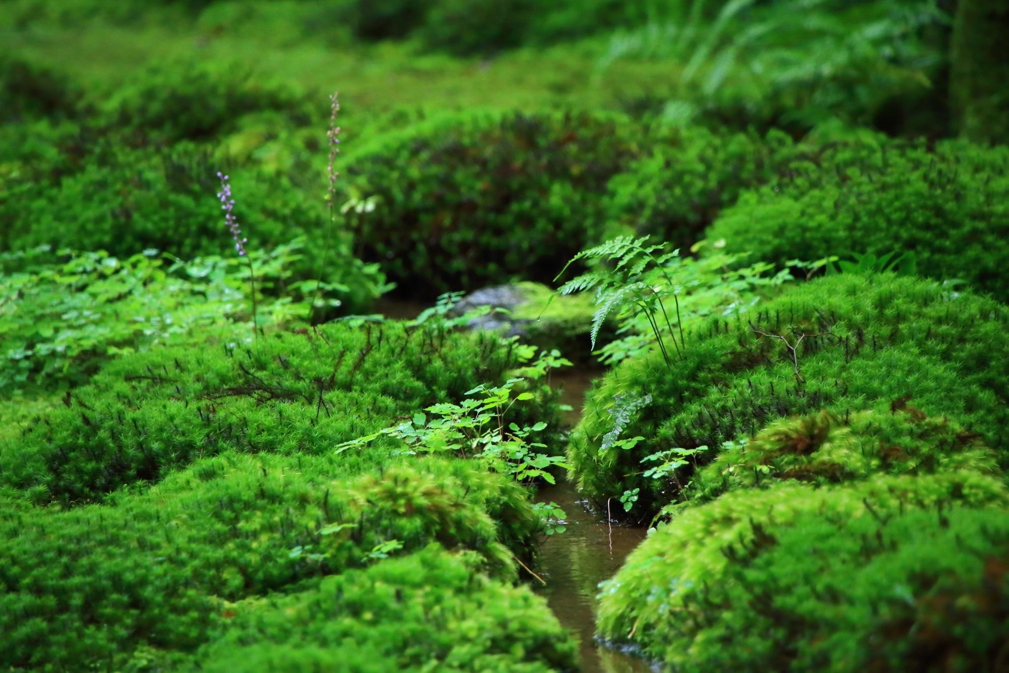 苔庭に流れる小さな小川