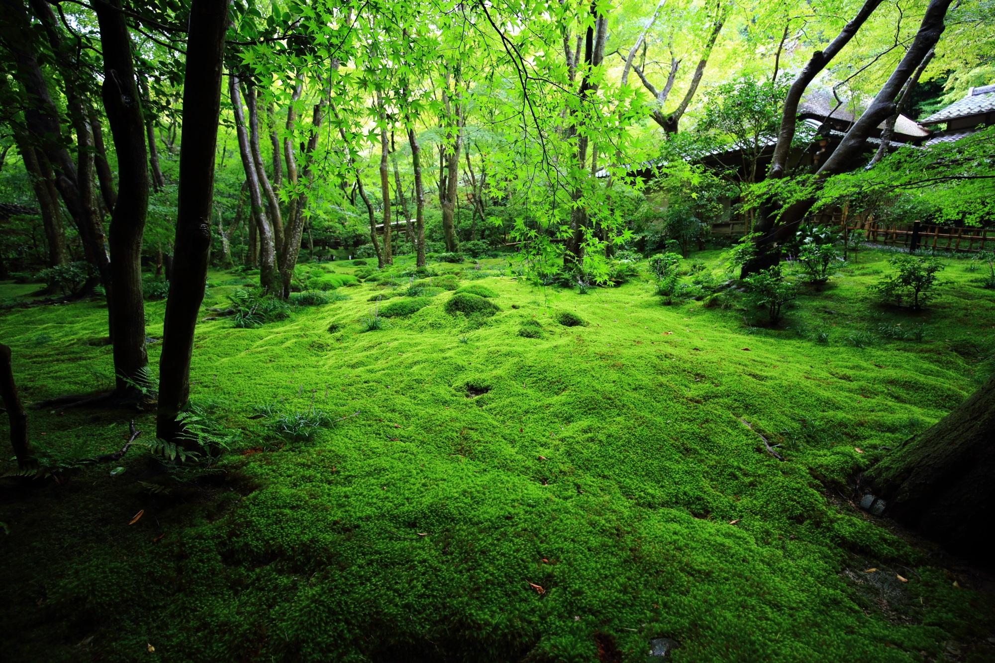 いろんな角度や場所から眺められる苔庭や草庵
