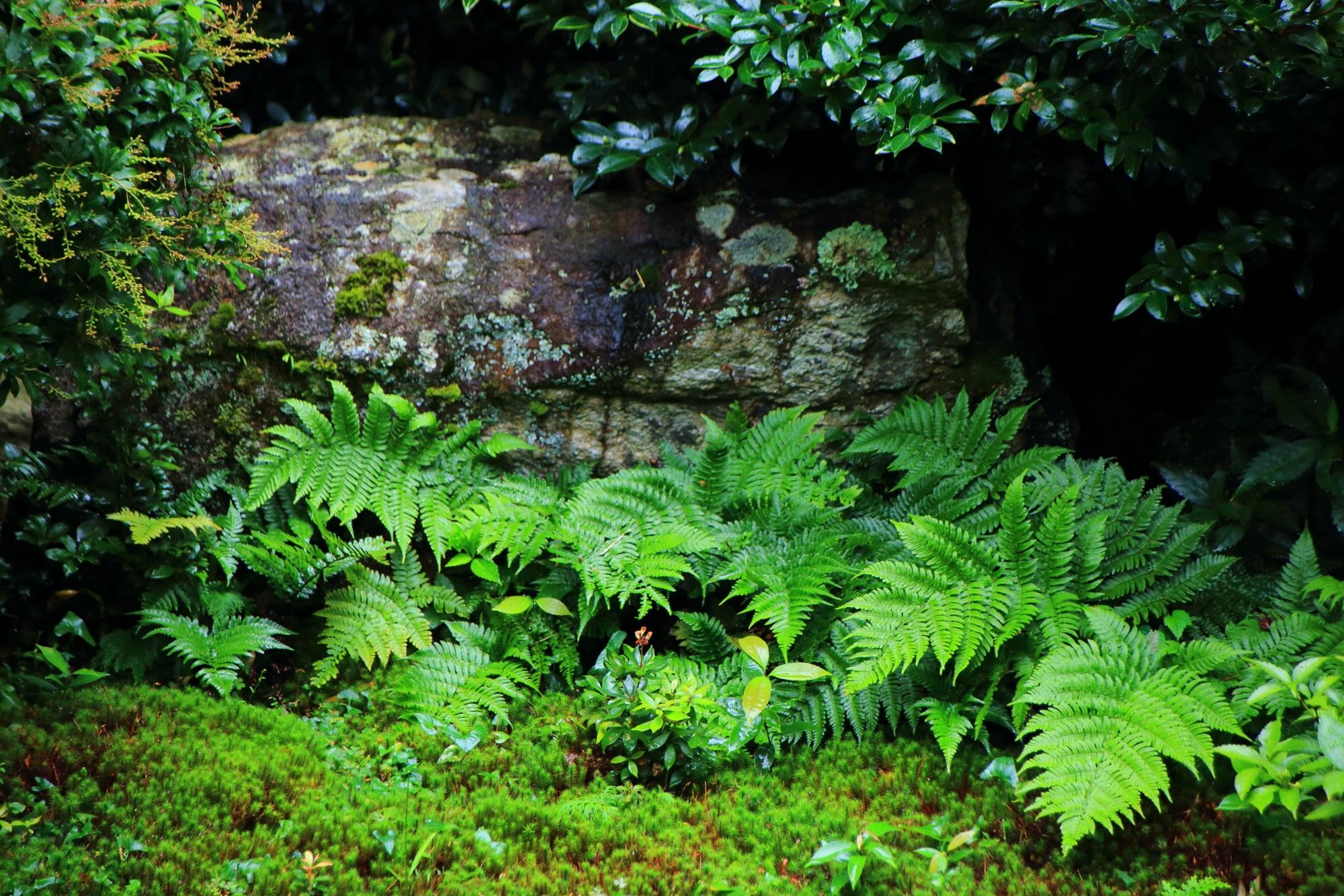 本堂中庭の苔とシダ