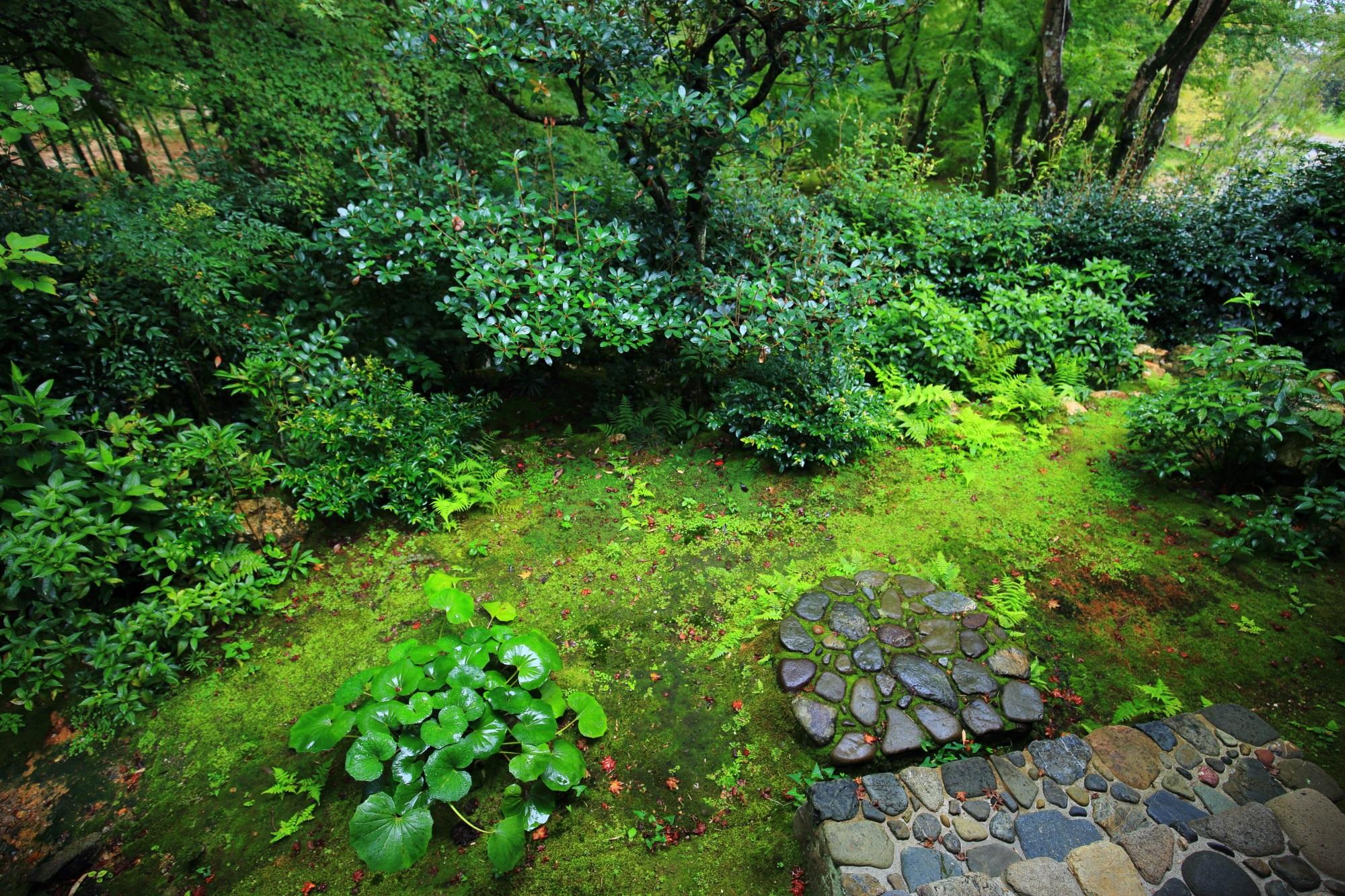 直指庵の本堂の美しい中庭