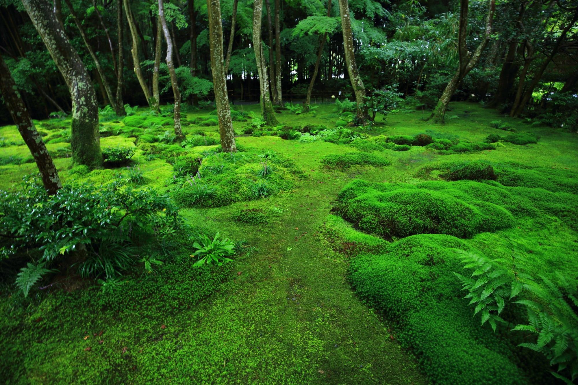 何時間でも眺めていられそうな見事な苔庭