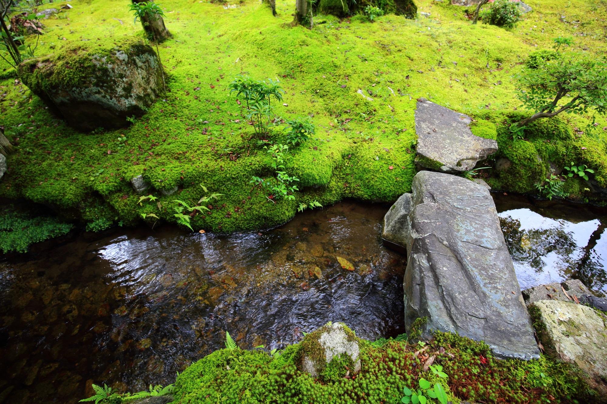 南禅寺 だいねいけん 池 苔