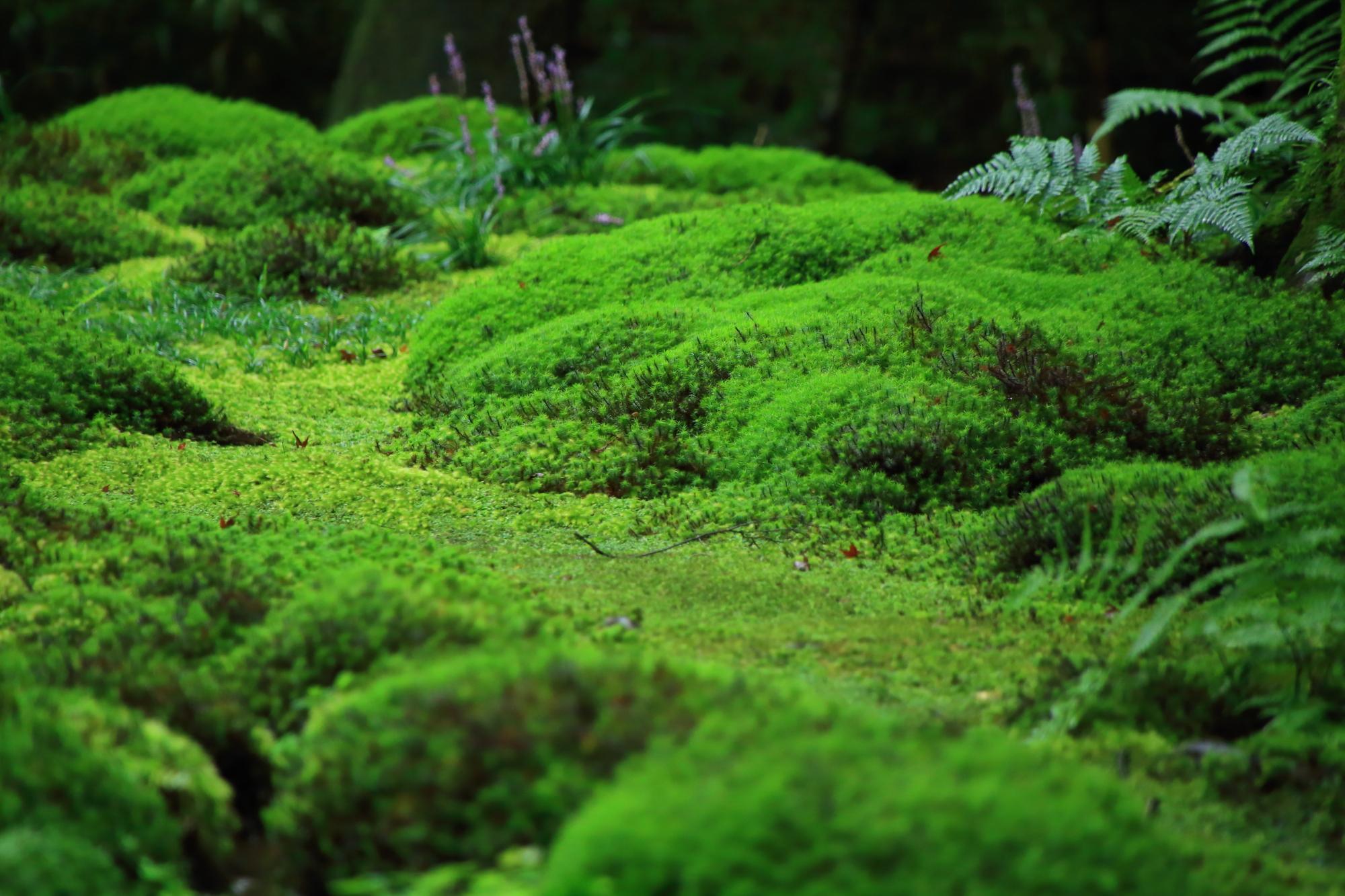 見所が豊富で様々な情景が楽しめる苔庭