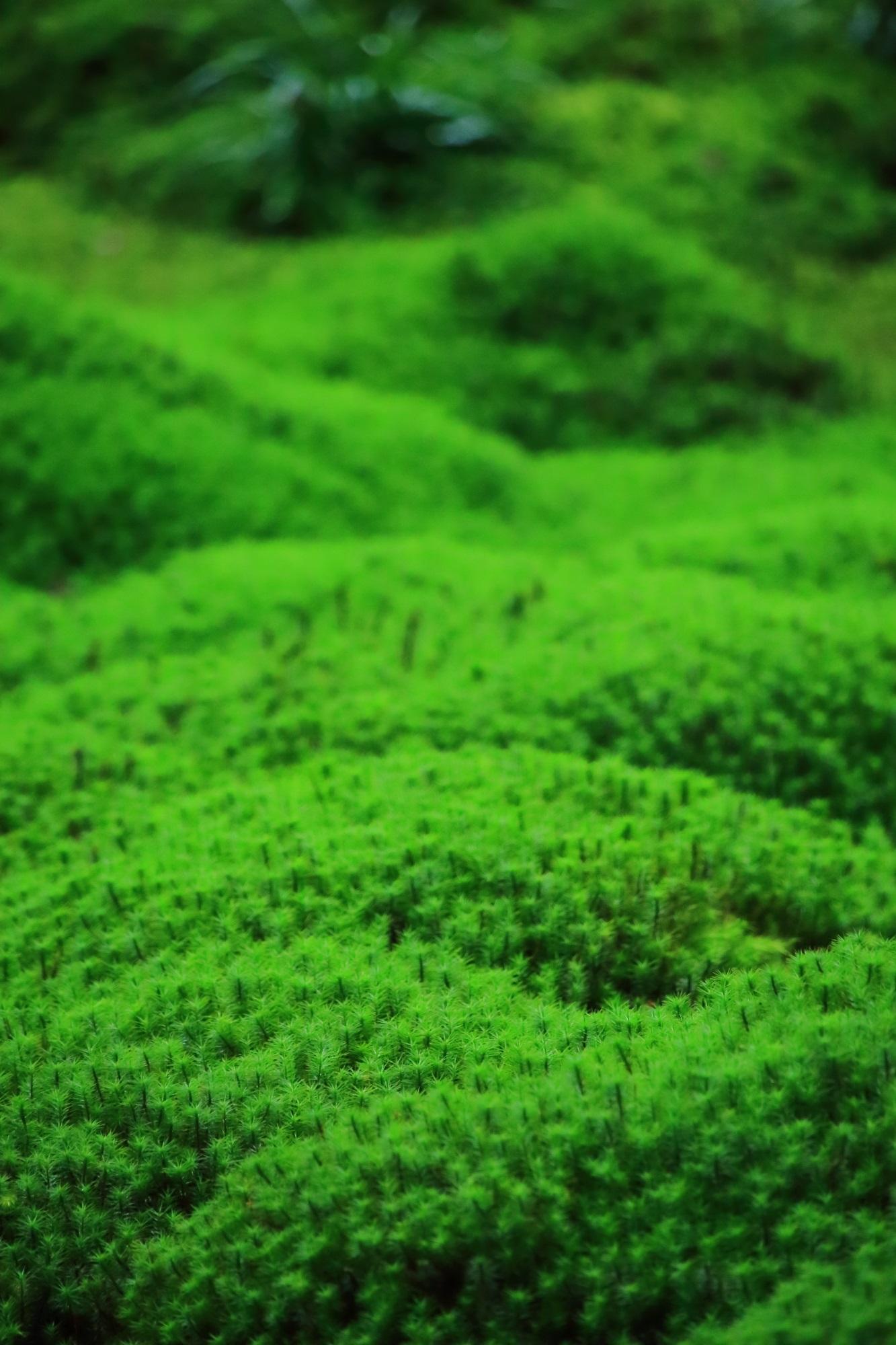 ふわふわで癒される絶品の苔