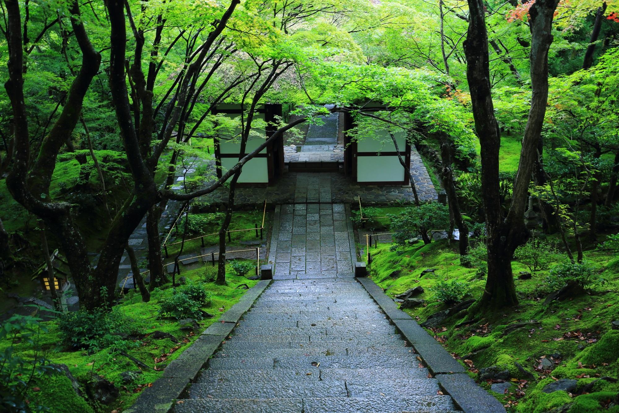 常寂光寺の本堂前石段から眺めた仁王門と苔と青もみじ