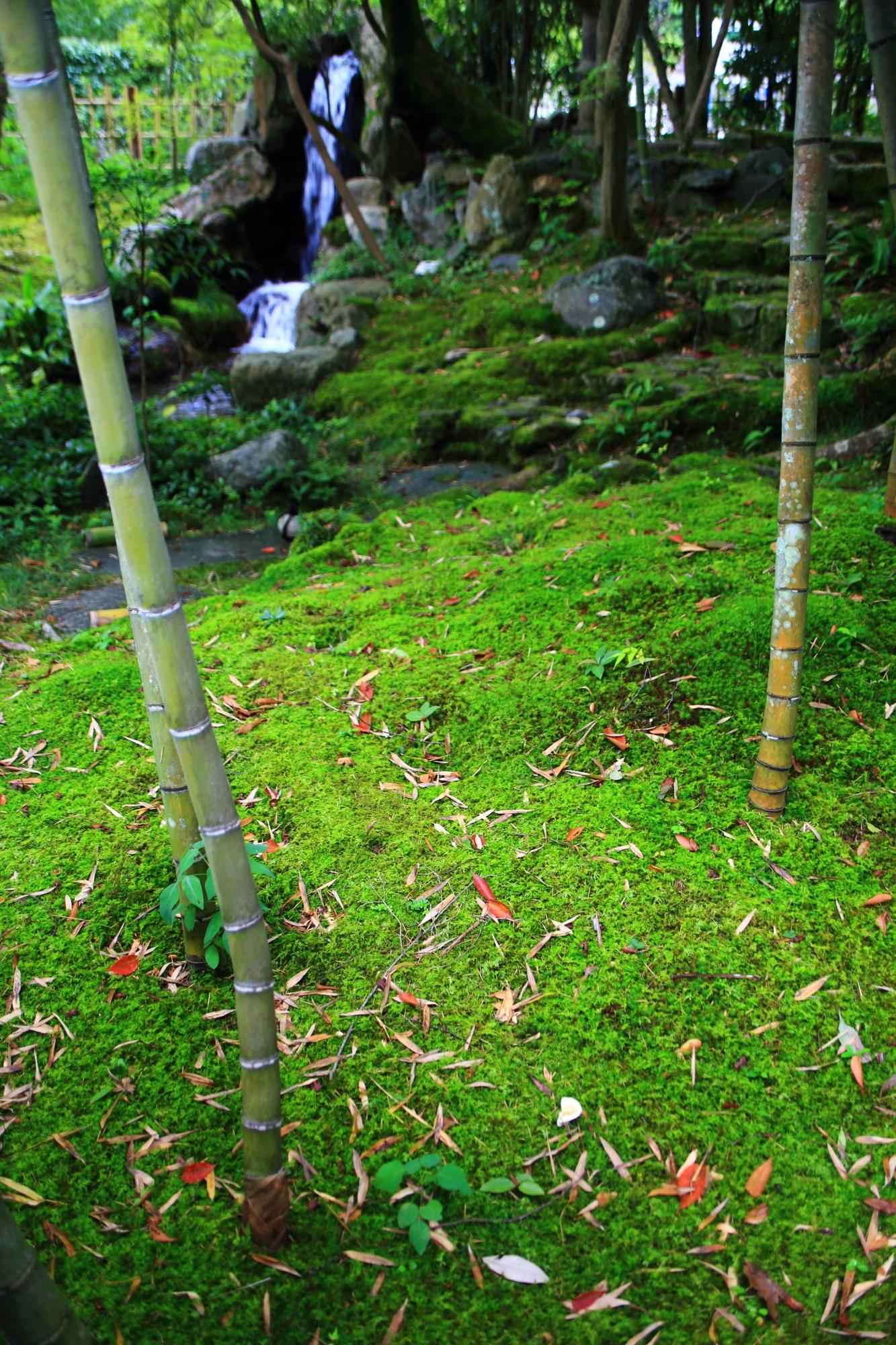 南禅寺大寧軒の苔と竹