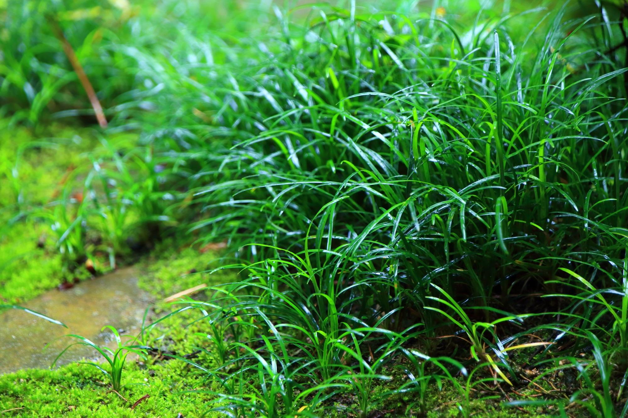 本堂前の苔と草