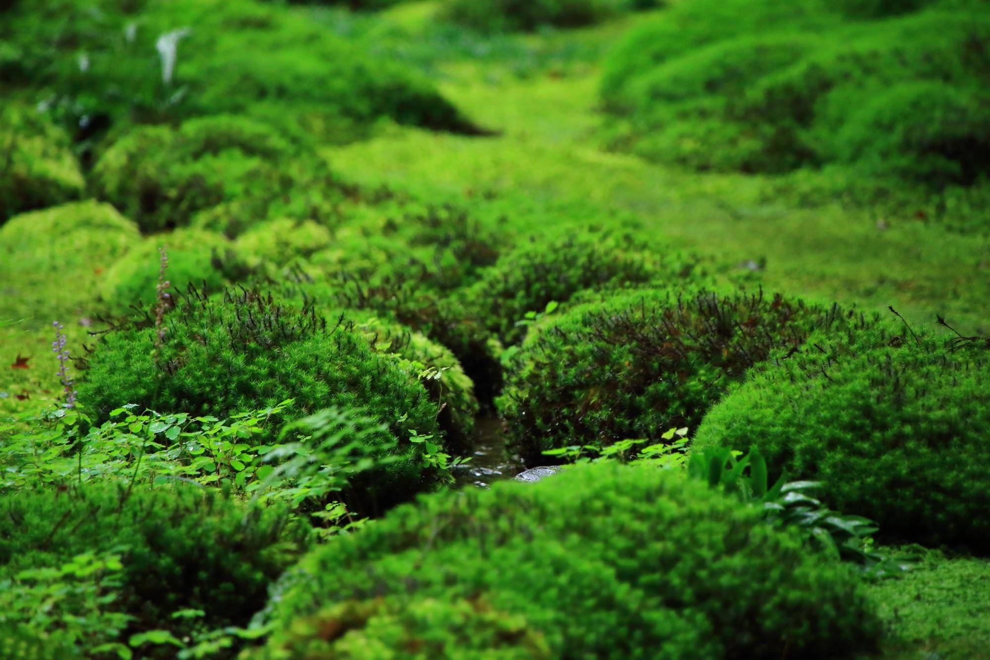 マイナスイオンが出まくりの苔