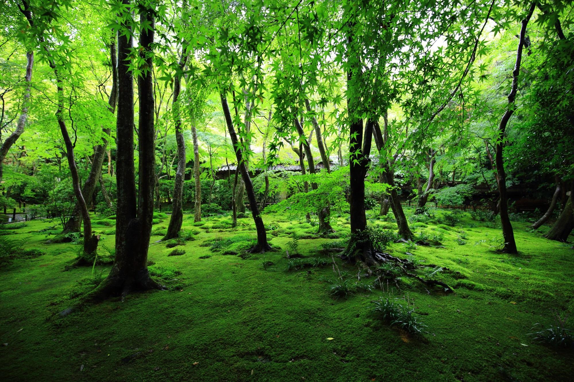 苔庭を演出する淡い光