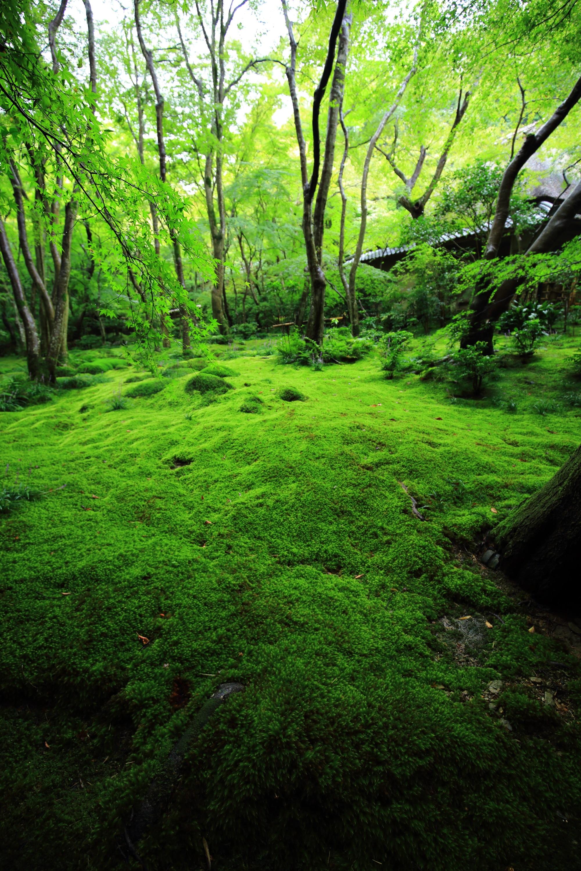 最高級の緑の世界