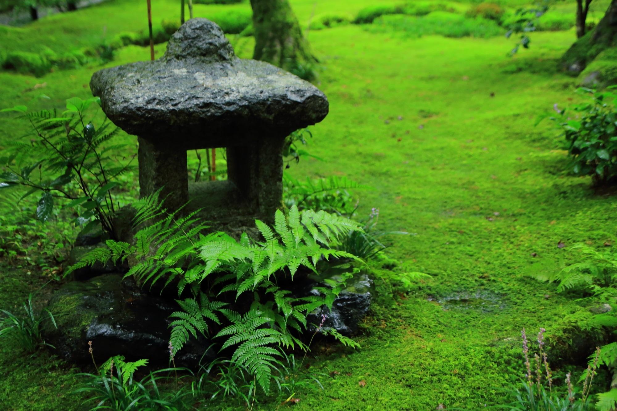 苔庭の燈籠