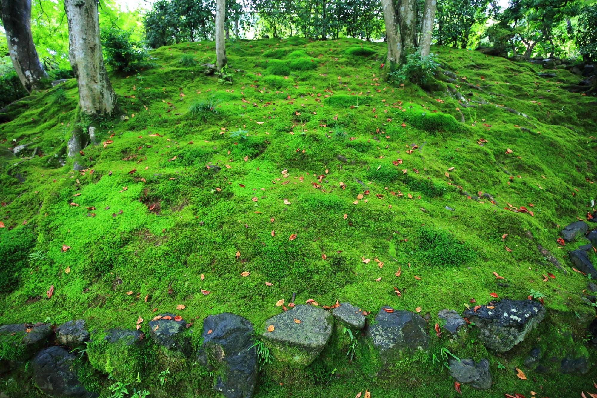 女の碑付近の美しい苔