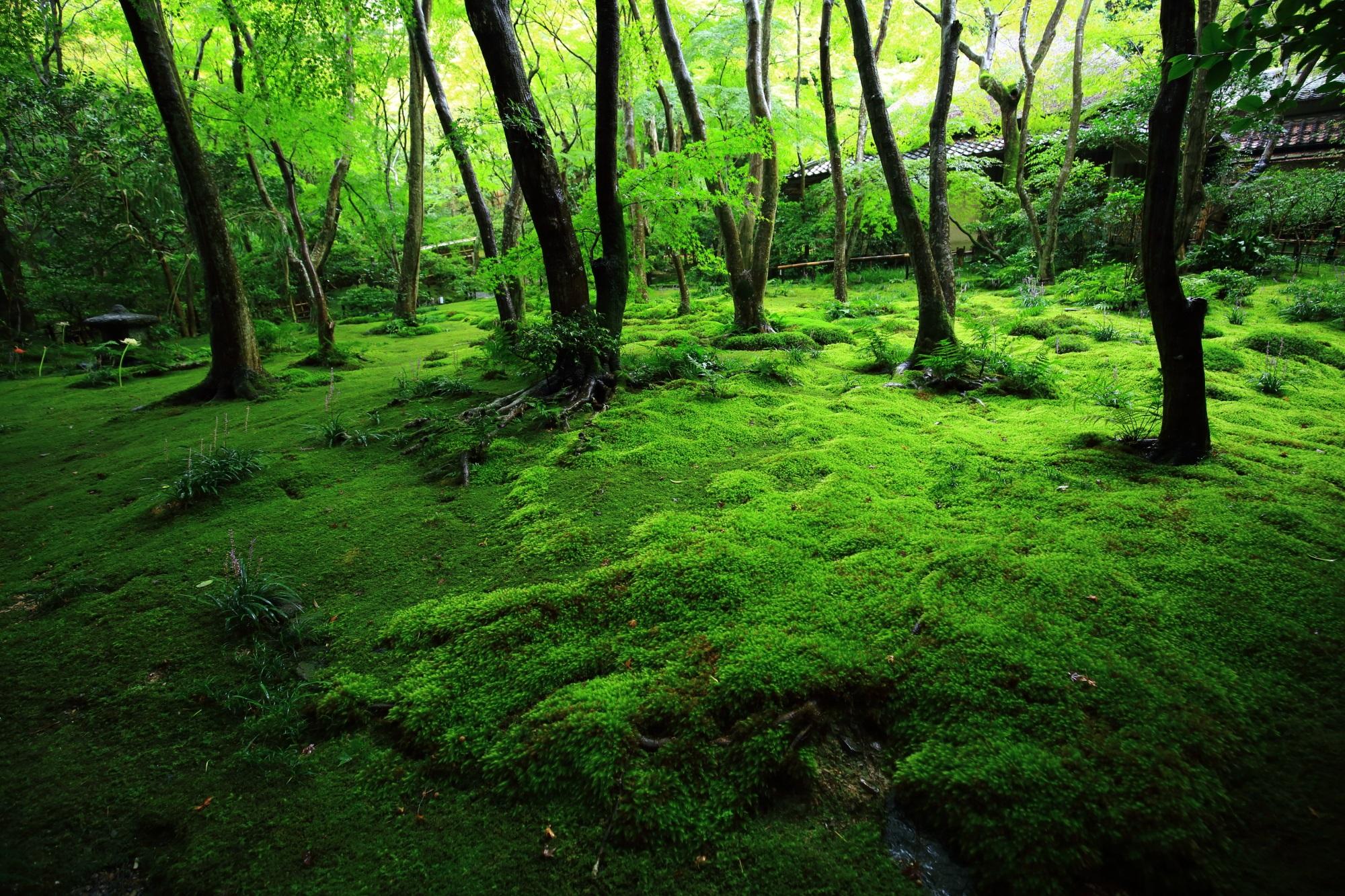 祇王寺の極上の苔庭