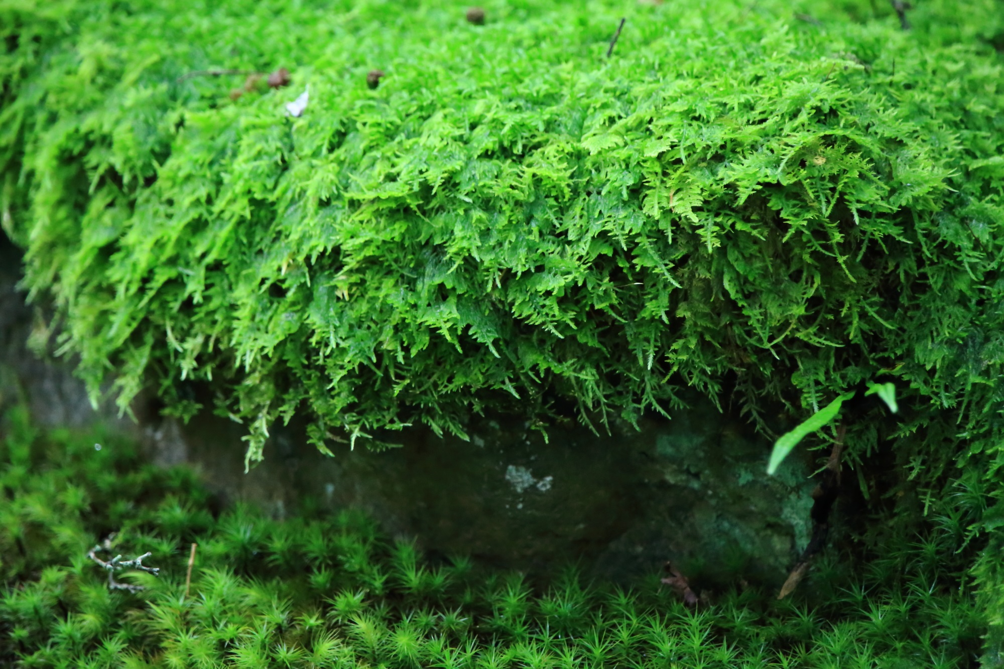 末吉坂の苔と岩