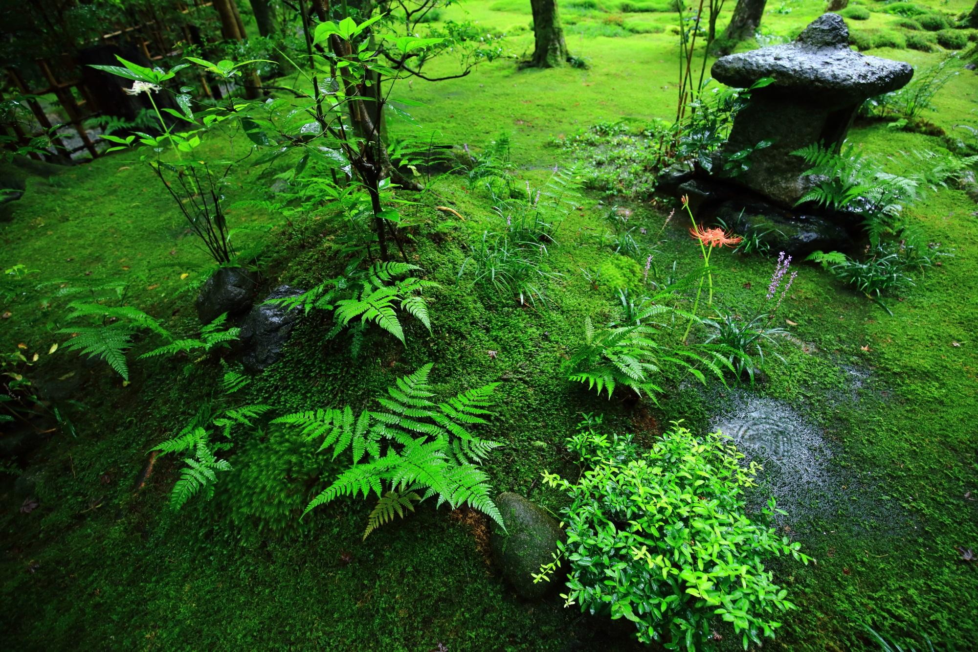 燈籠の周辺の鮮やかで綺麗なシダや植物