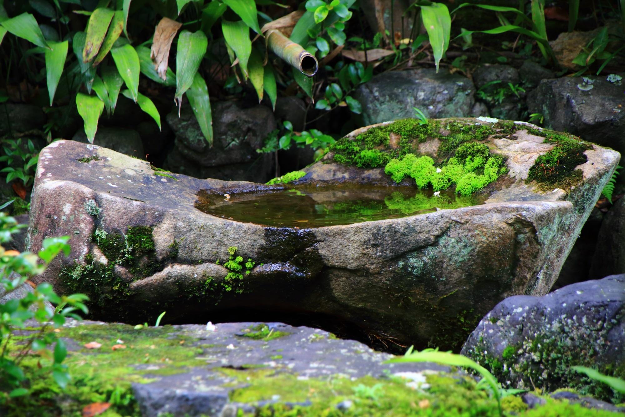 南禅寺大寧軒の手水鉢と苔