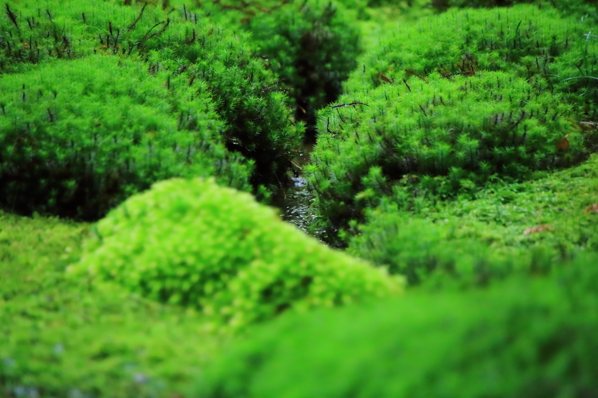 水と緑がたっぷりの癒しの空間