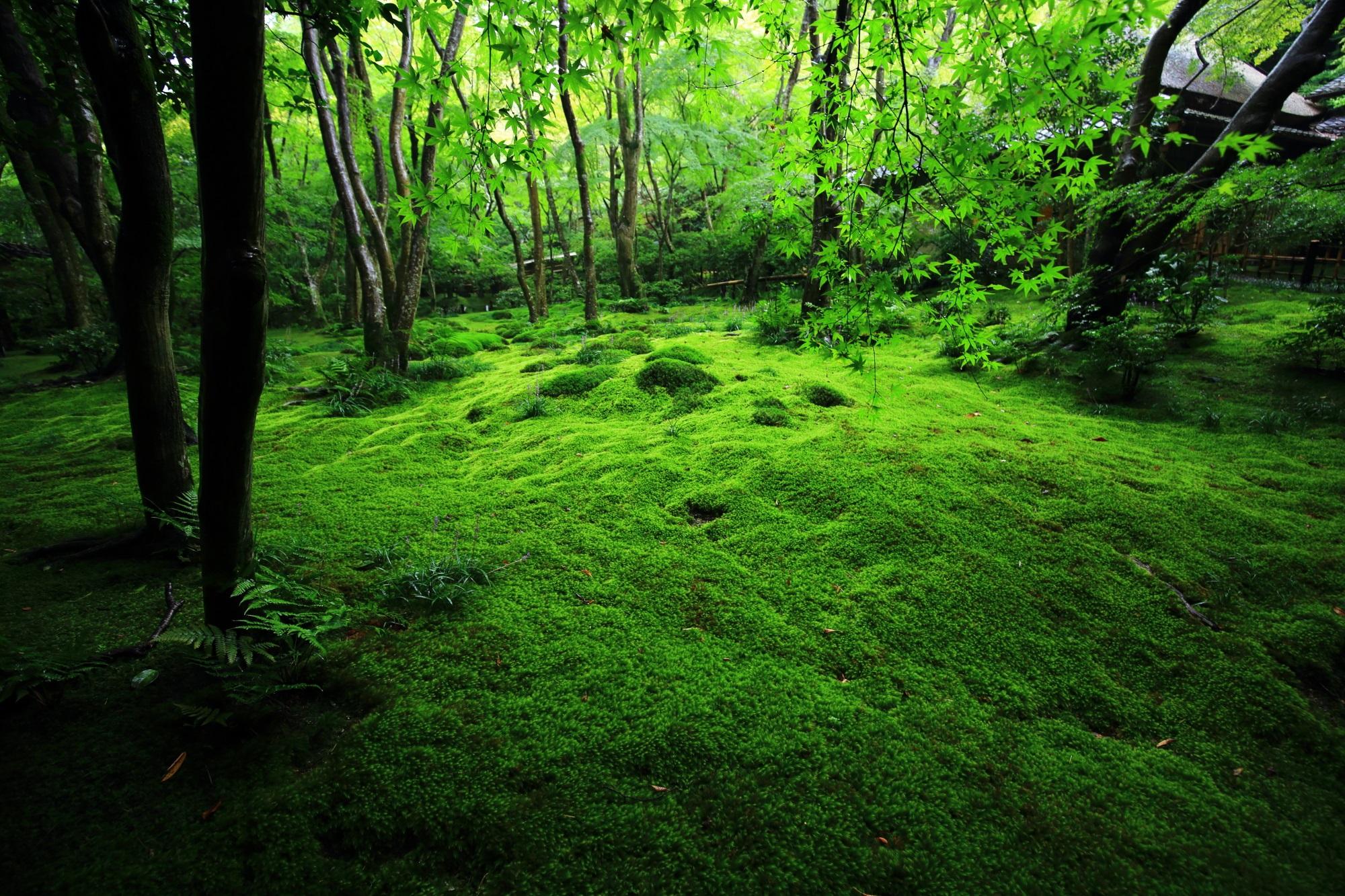 下は苔で上は青もみじの緑の空間