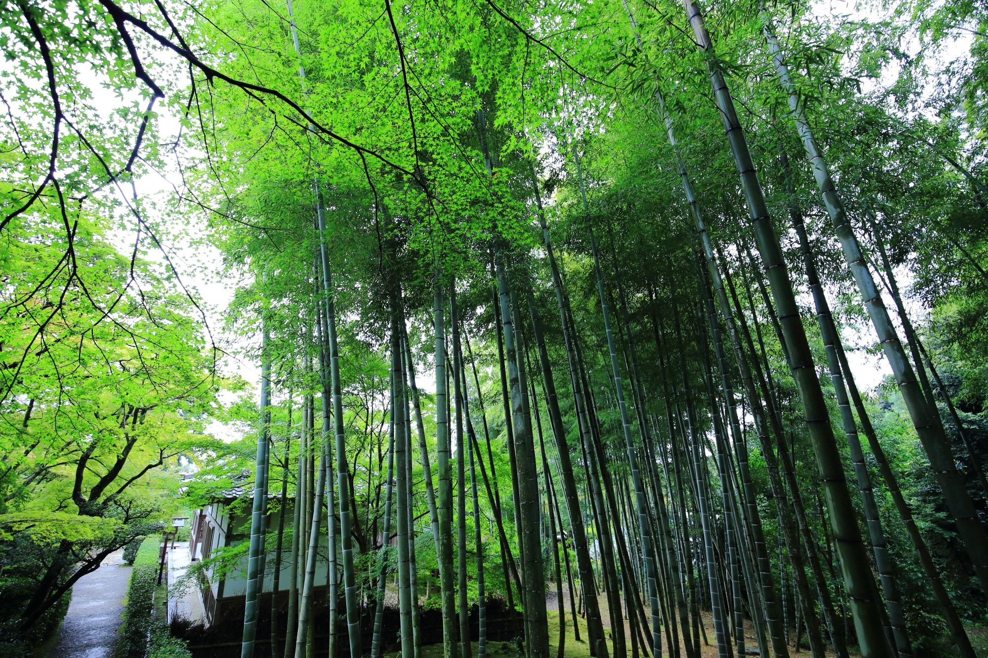常寂光寺の妙見大菩薩縁起と竹林