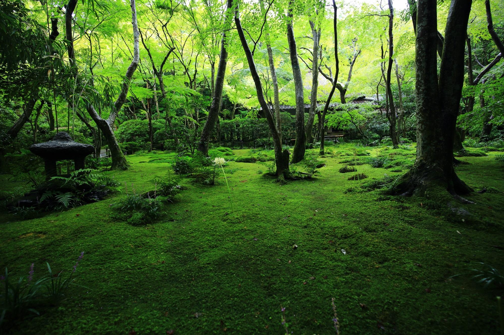 雨で潤って美しさが際立つ苔庭