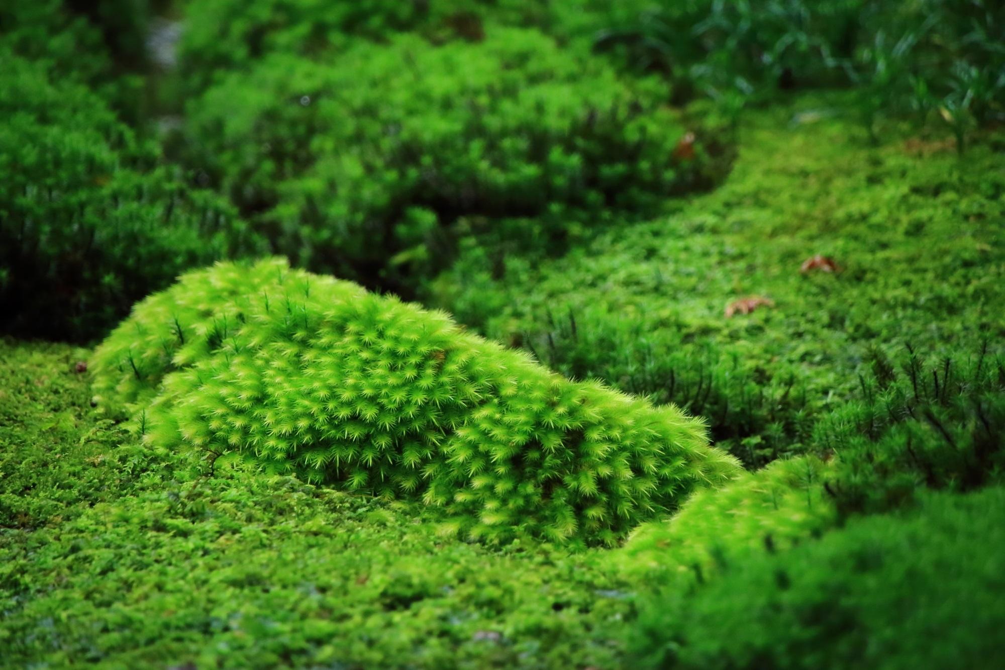 同じ緑の苔でも色や種類はかなり異なる苔