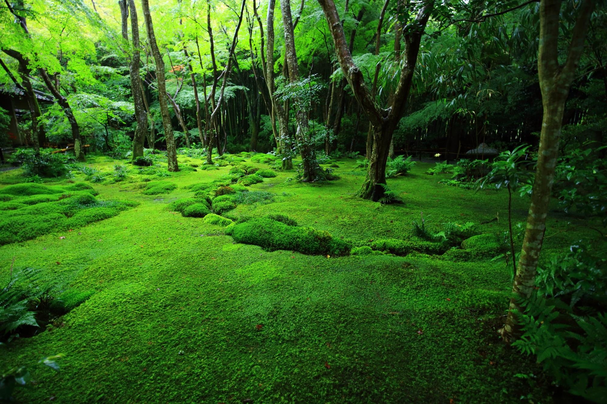 祇王寺 苔 奥嵯峨の美しすぎる雨で輝く極上の苔庭