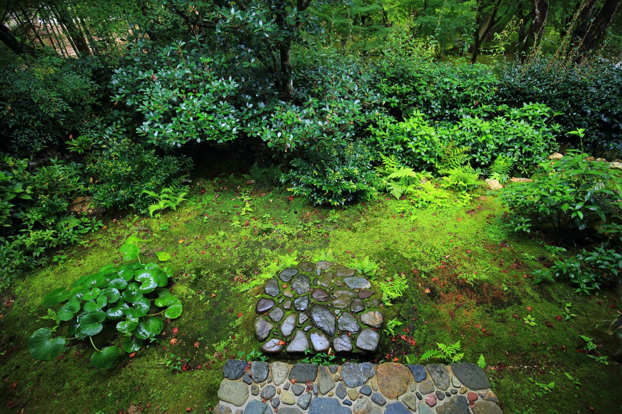 直指庵 青もみじと苔 想い出草と北嵯峨の静寂の緑