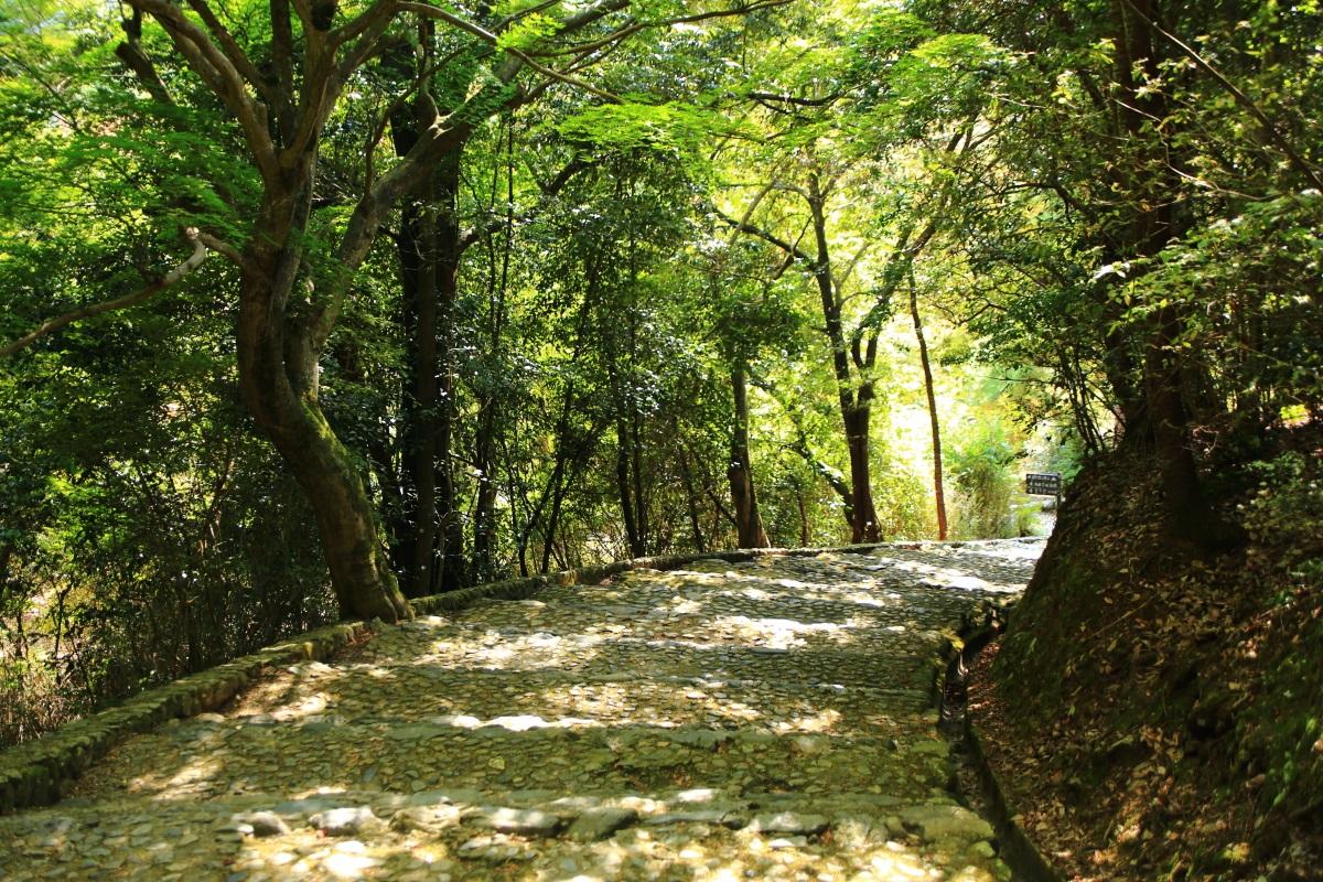 嵐山公園 亀岡地区の石段と緑
