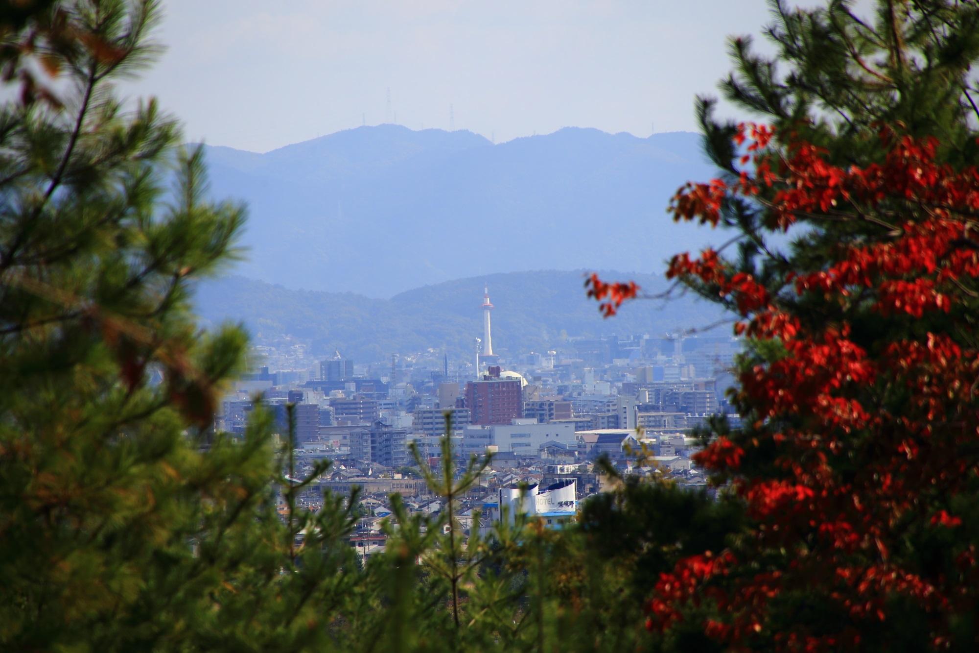 嵐山公園 亀山地区の展望台から眺める京都タワー