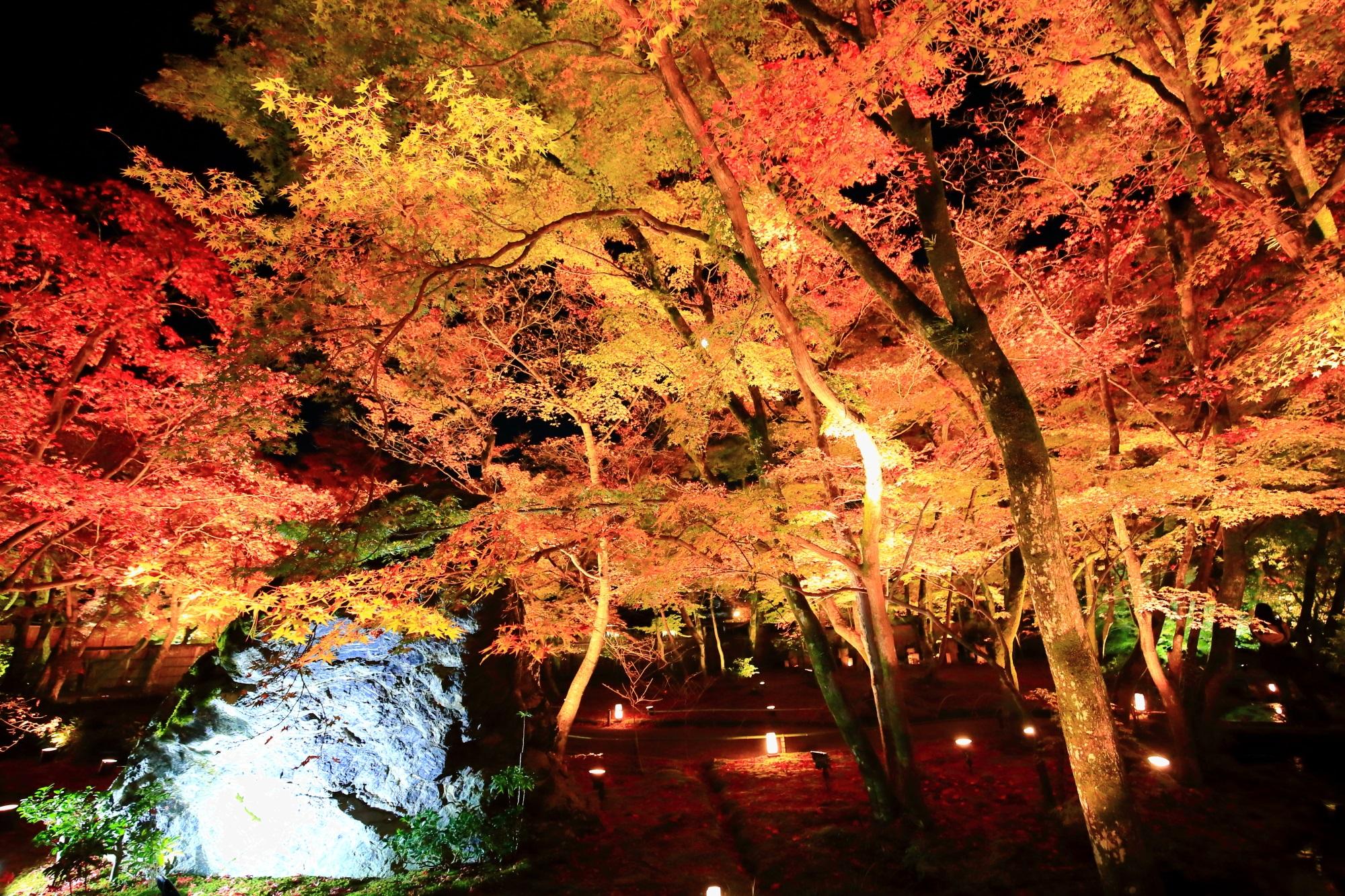 優美なライトアップされた紅葉につつまれた嵐山宝厳院の獅子岩