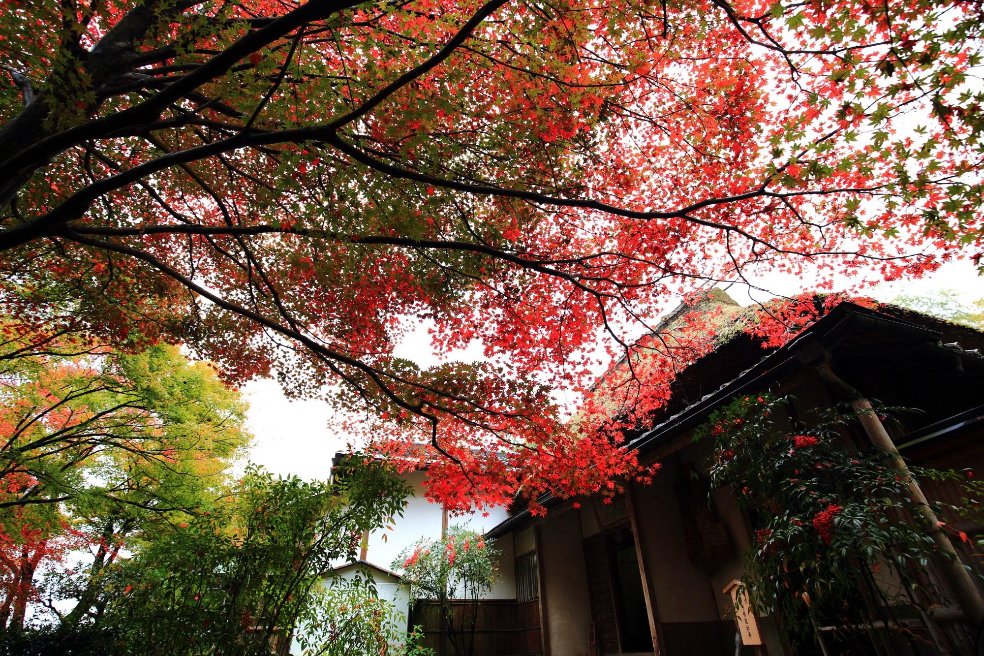 直指庵の本堂と紅葉