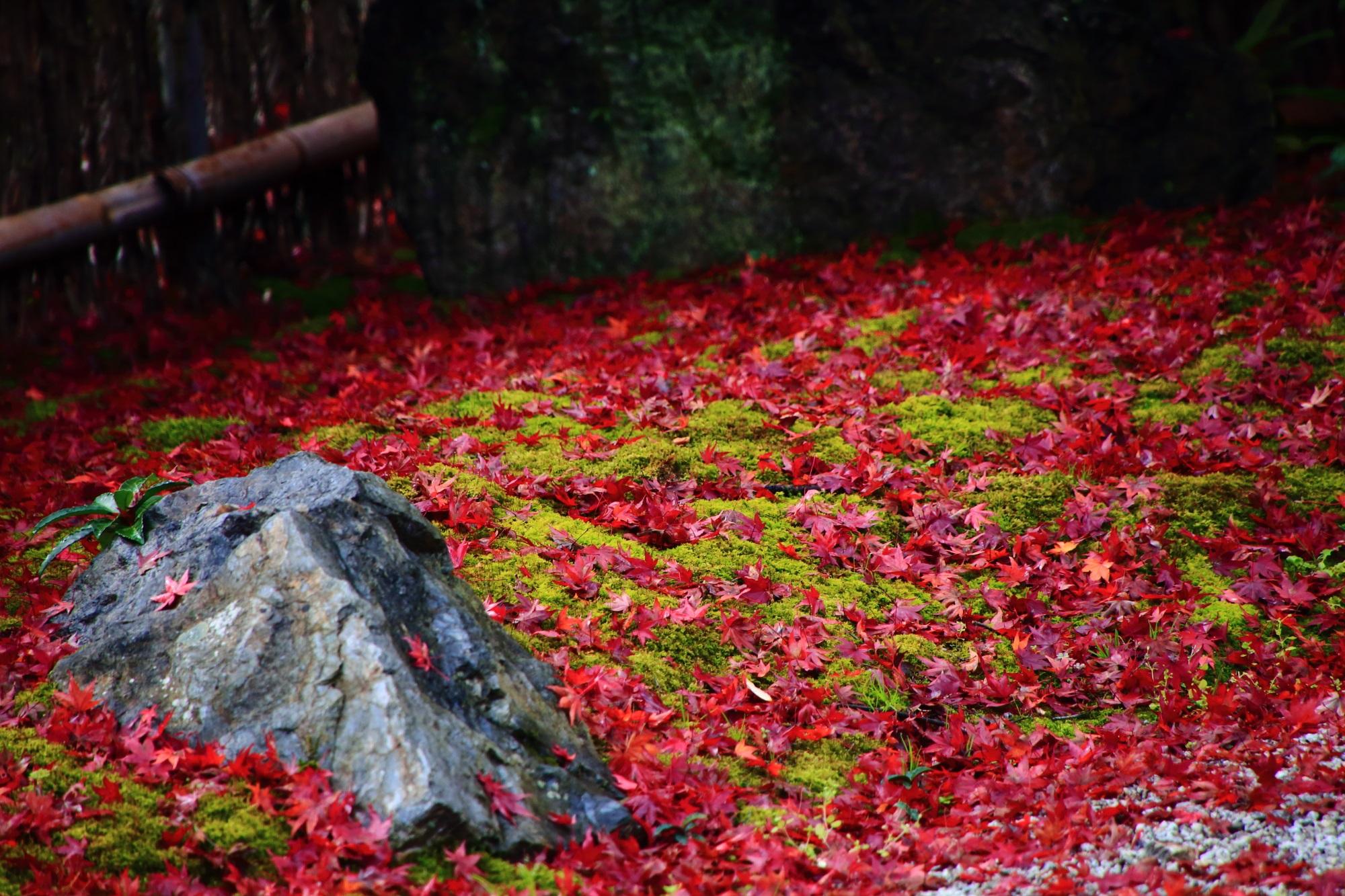 北嵯峨直指庵の阿弥陀堂庭園の風情ある苔と散りもみじ