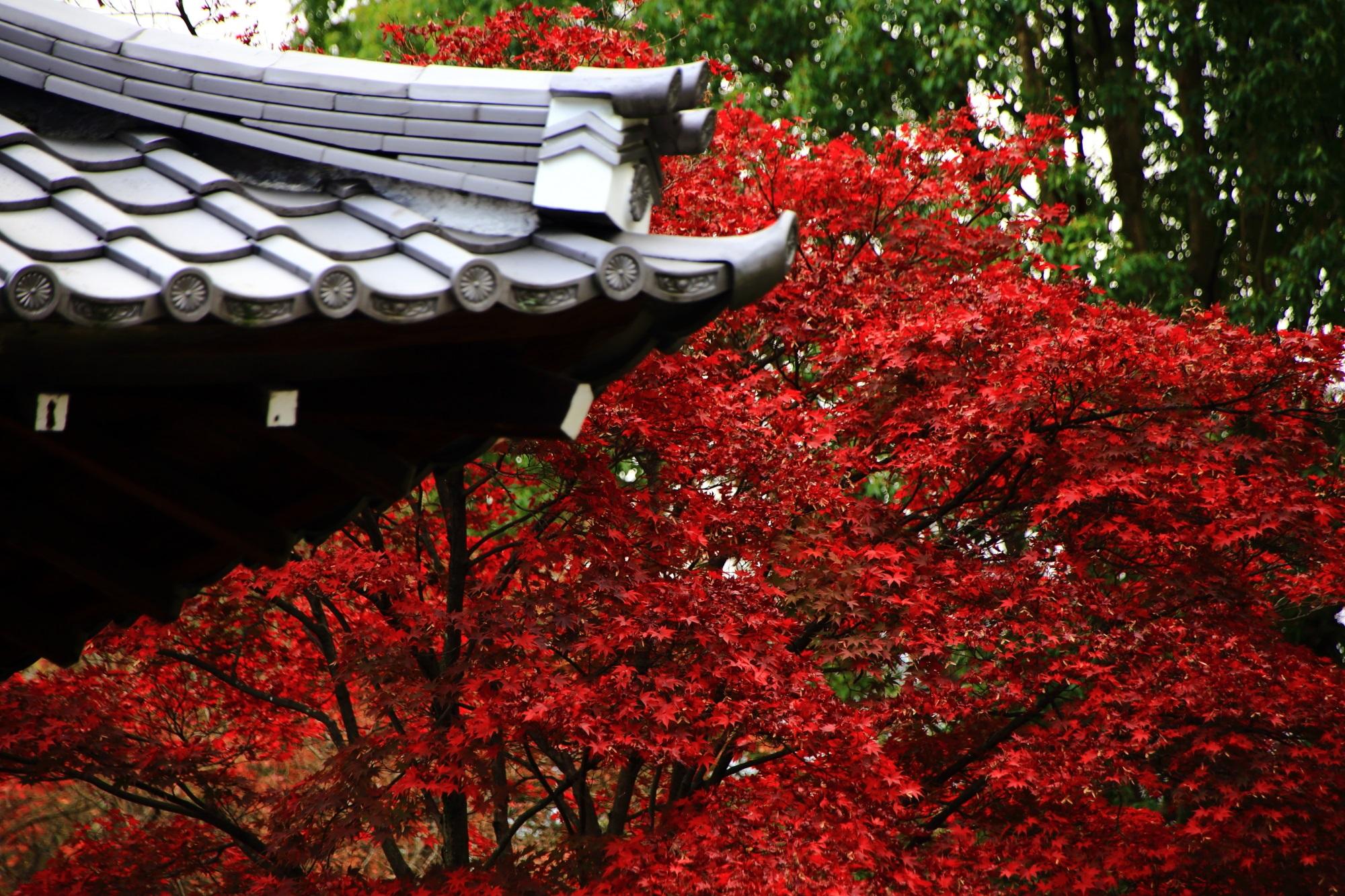 廬山寺の屋根瓦と真っ赤な紅葉
