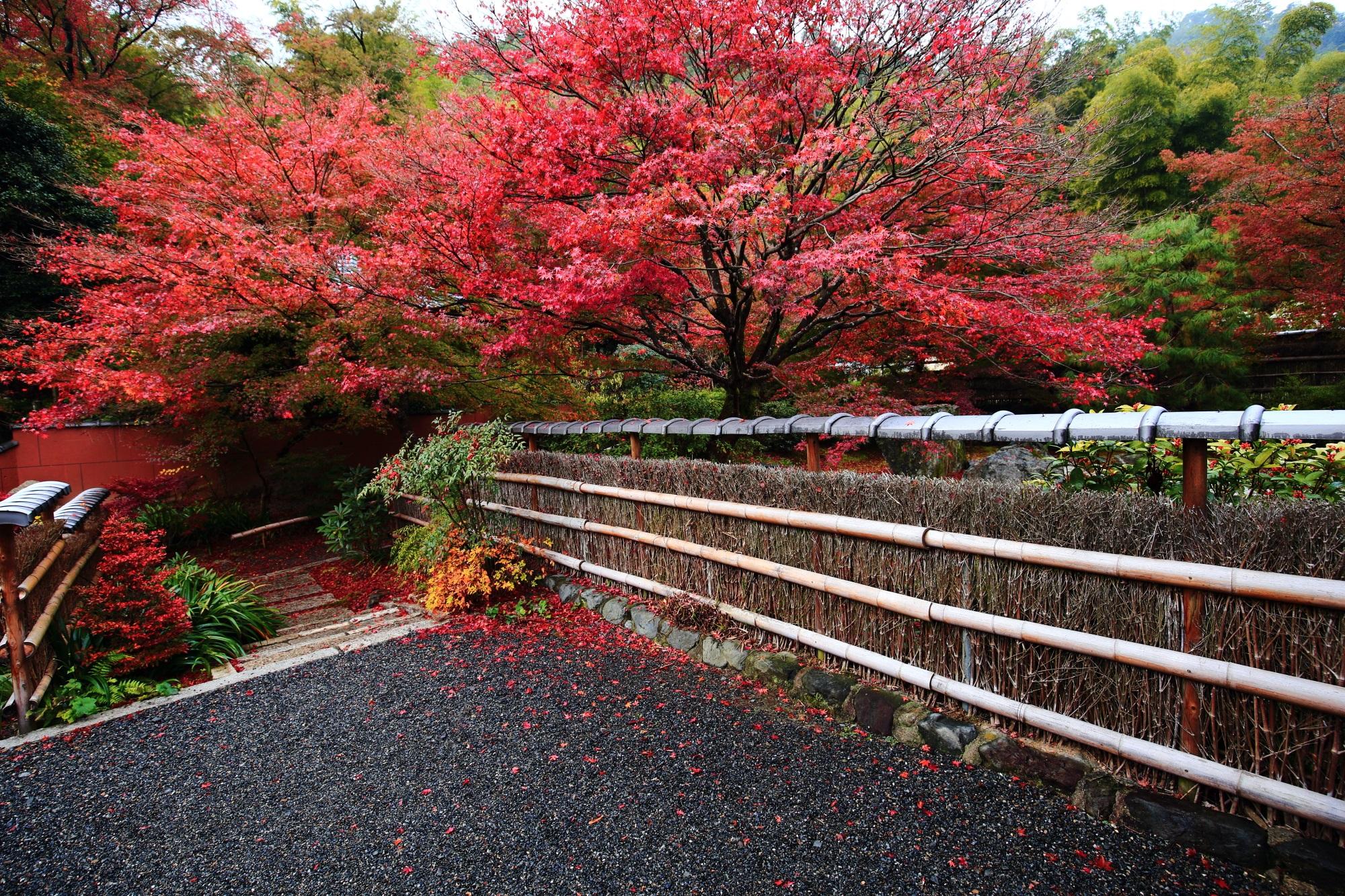 嵯峨直指庵の阿弥陀堂の鮮やかな赤い紅葉