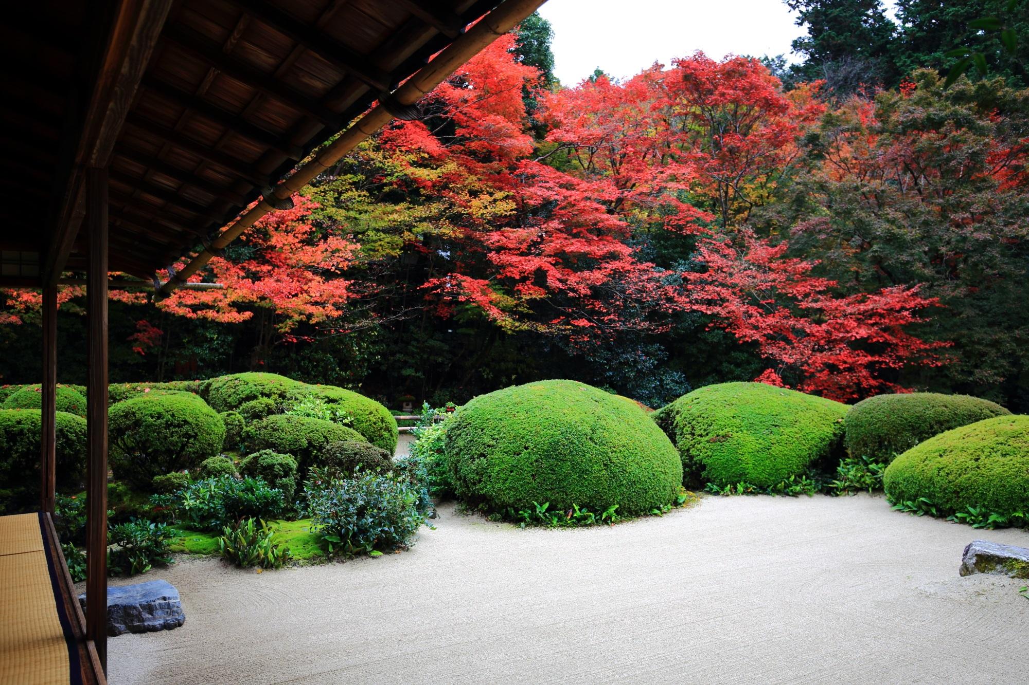 詩仙堂の美しい見ごろの紅葉