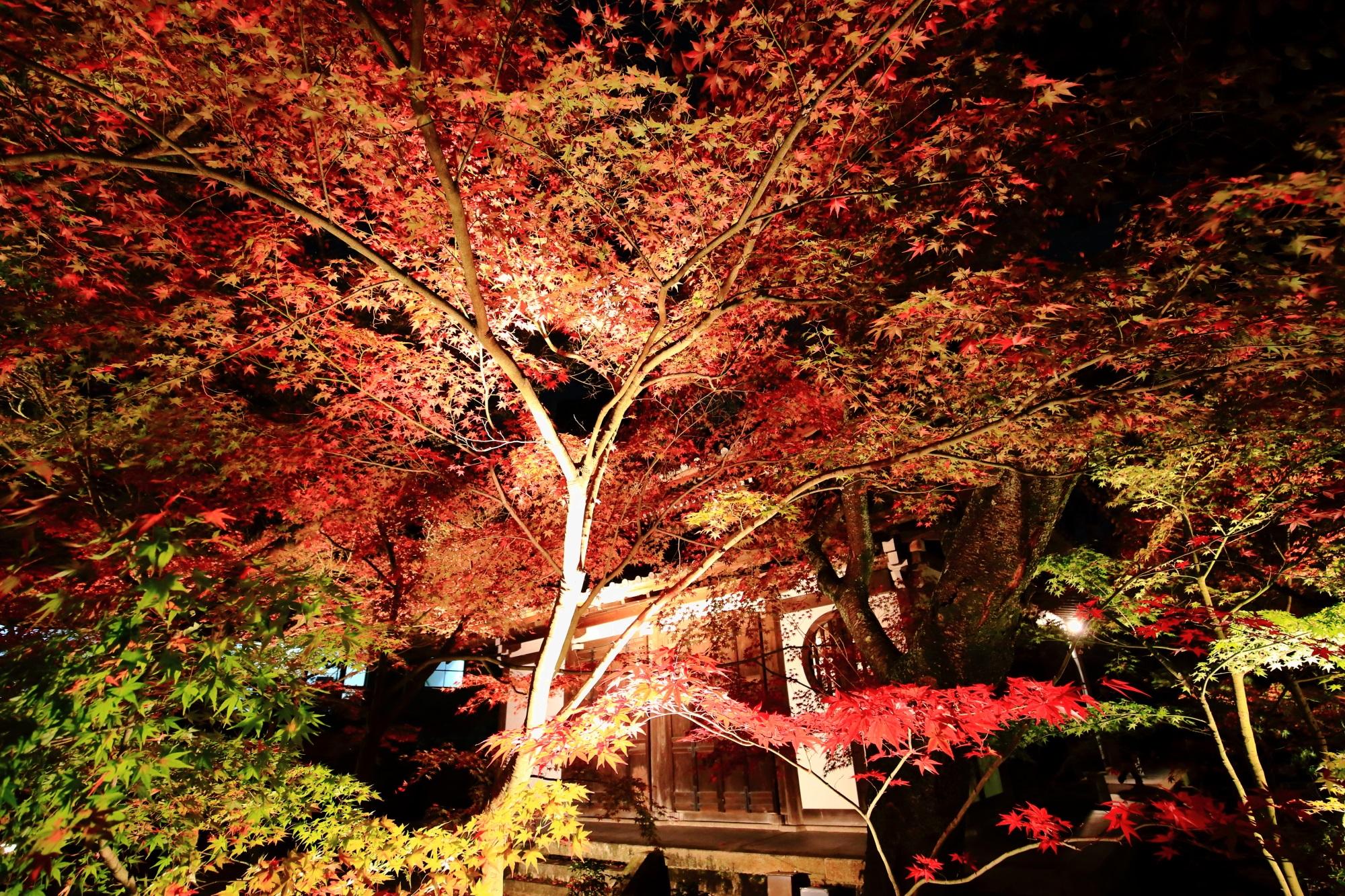 永観堂の画仙堂と美しい見ごろの紅葉