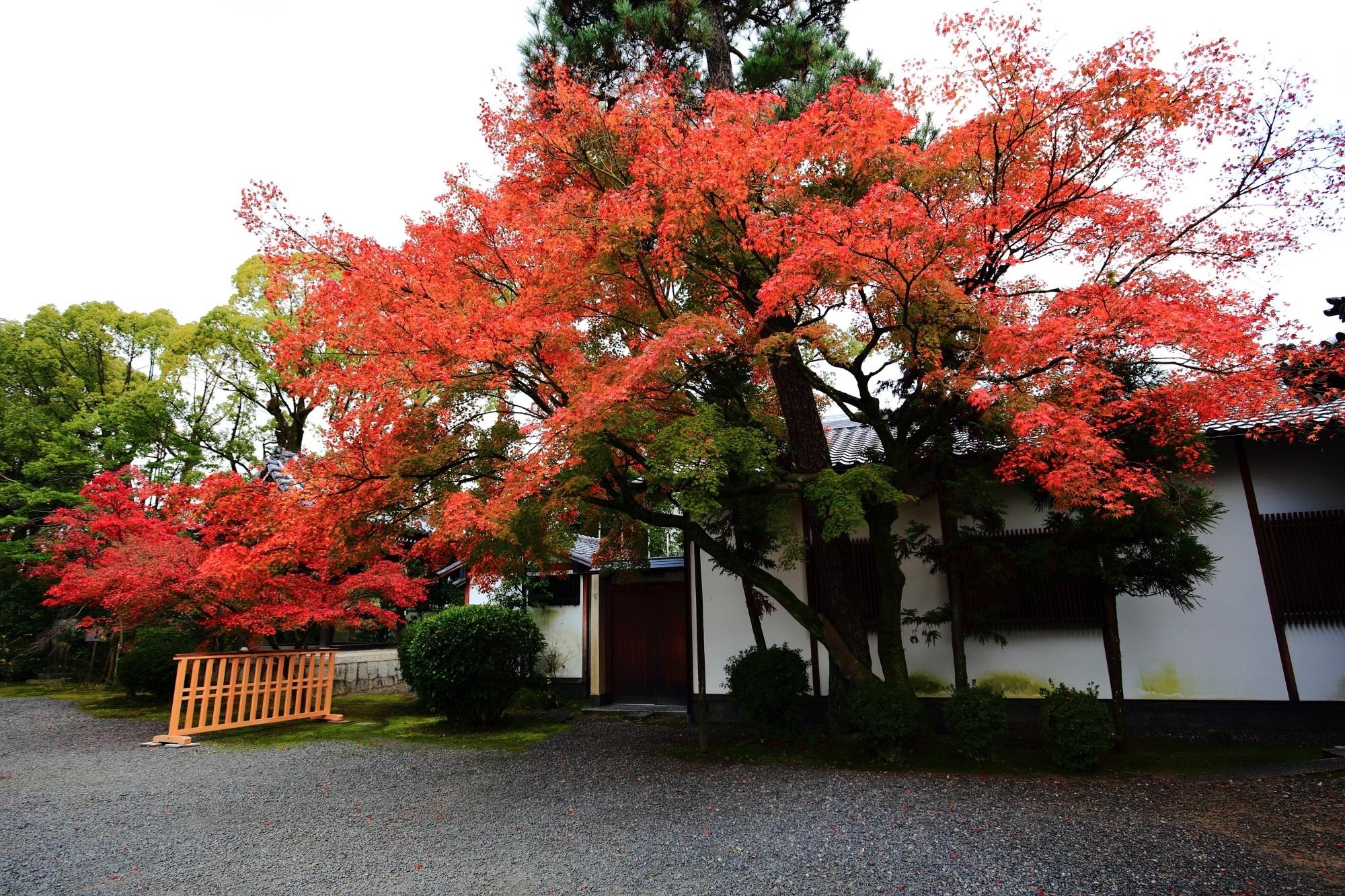 廬山寺の黒門付近の鮮やかな紅葉