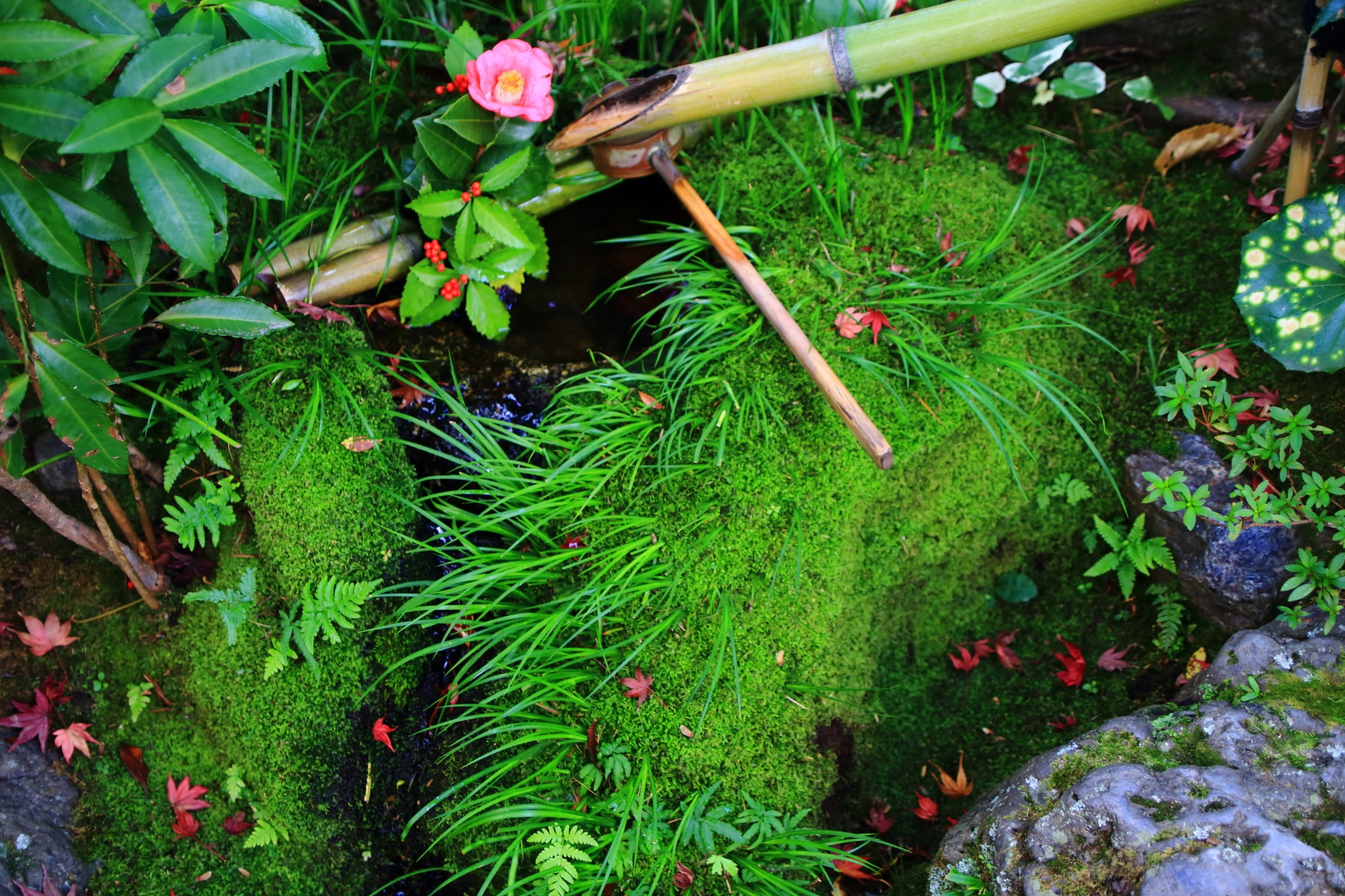 上品な散りもみじと椿が華やぐ見事な彩りの余香苑のつくばいと水琴窟