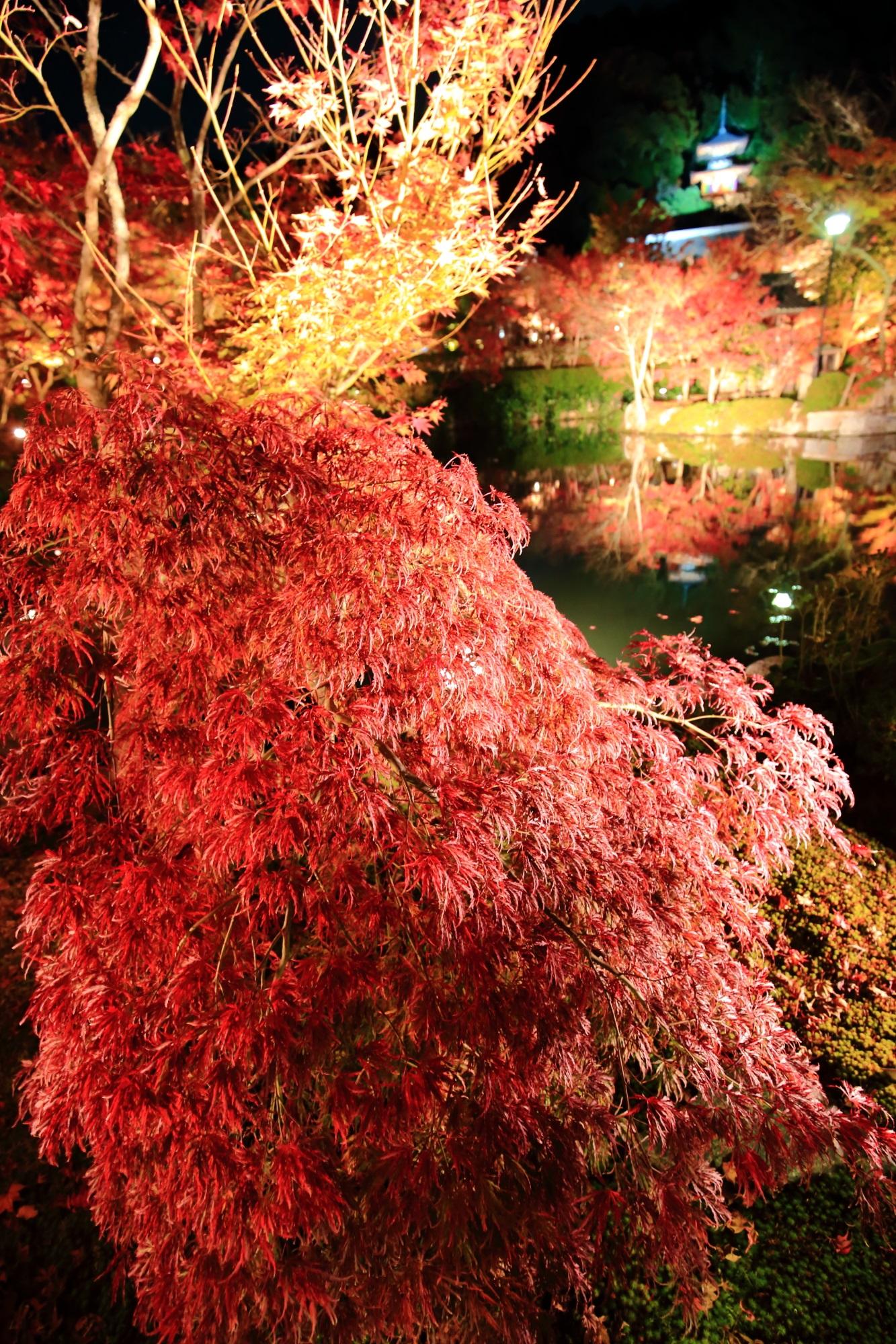 美しい紅葉につつまれた永観堂の放生池と多宝塔