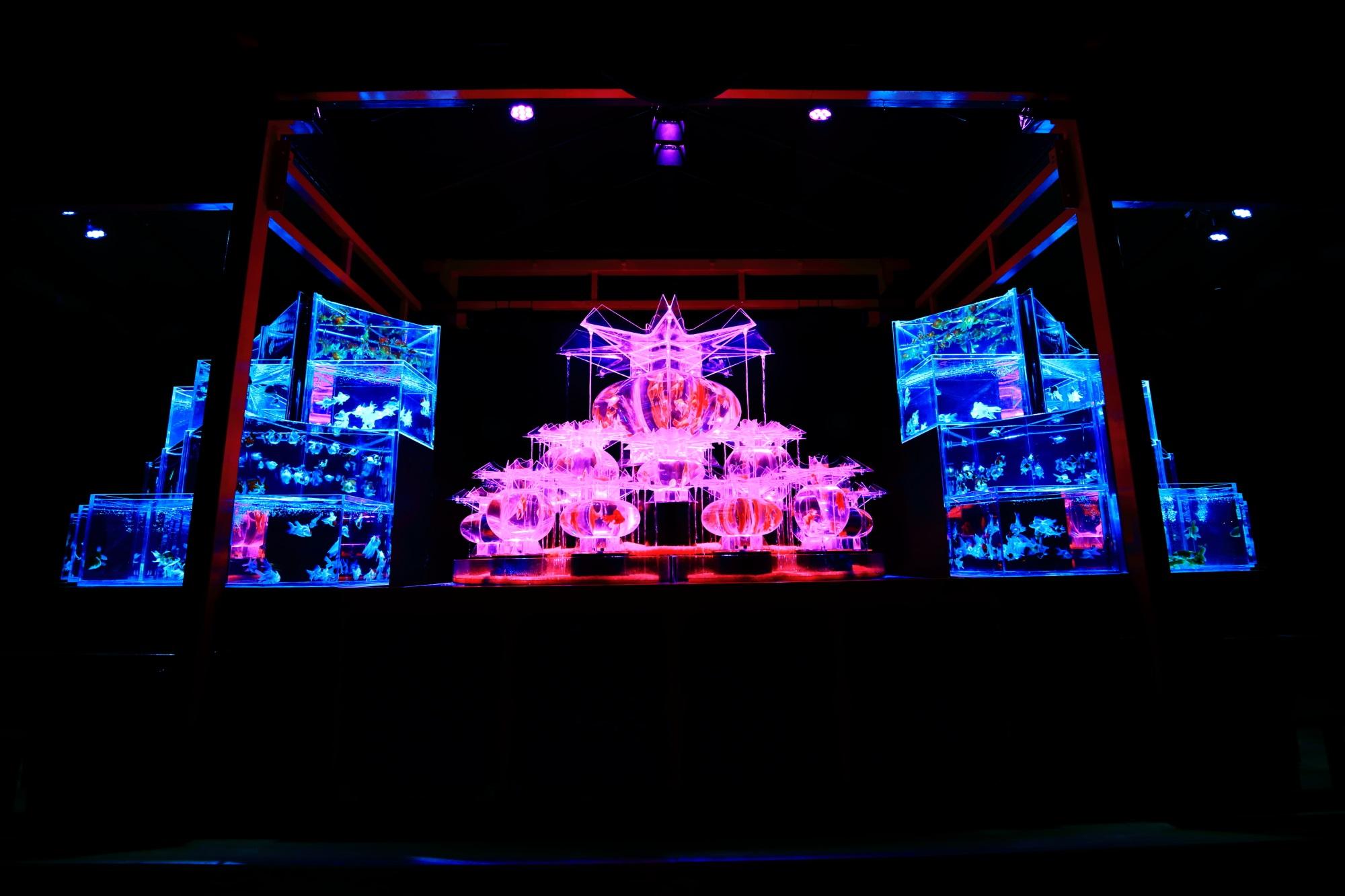 アートアクアリウム城 2015年 大奥 金魚の舞