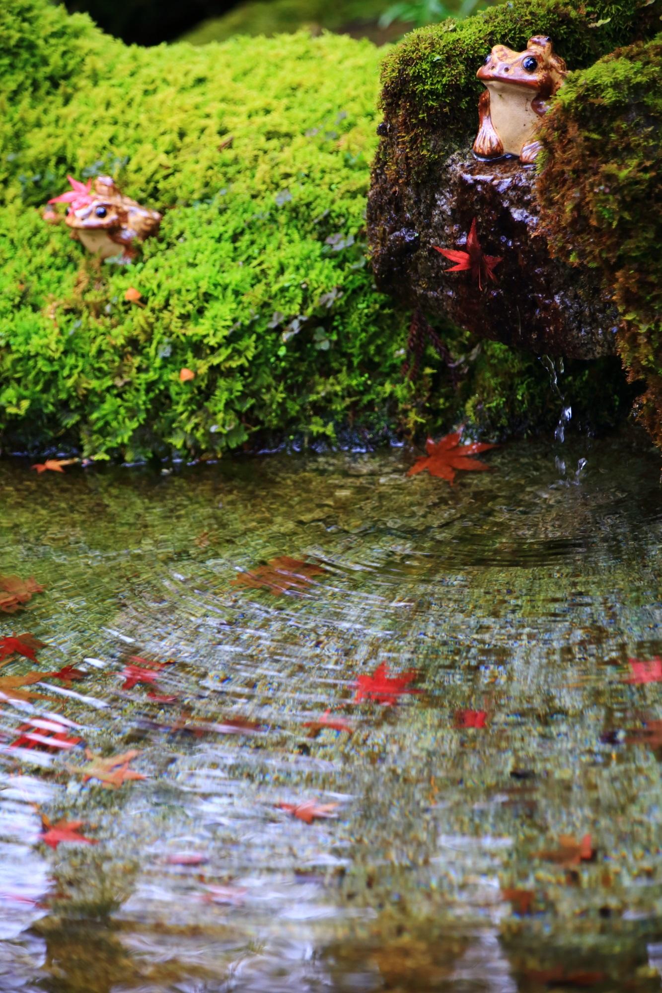 天授庵の紅葉が散る手水鉢のようなところのカエルさん