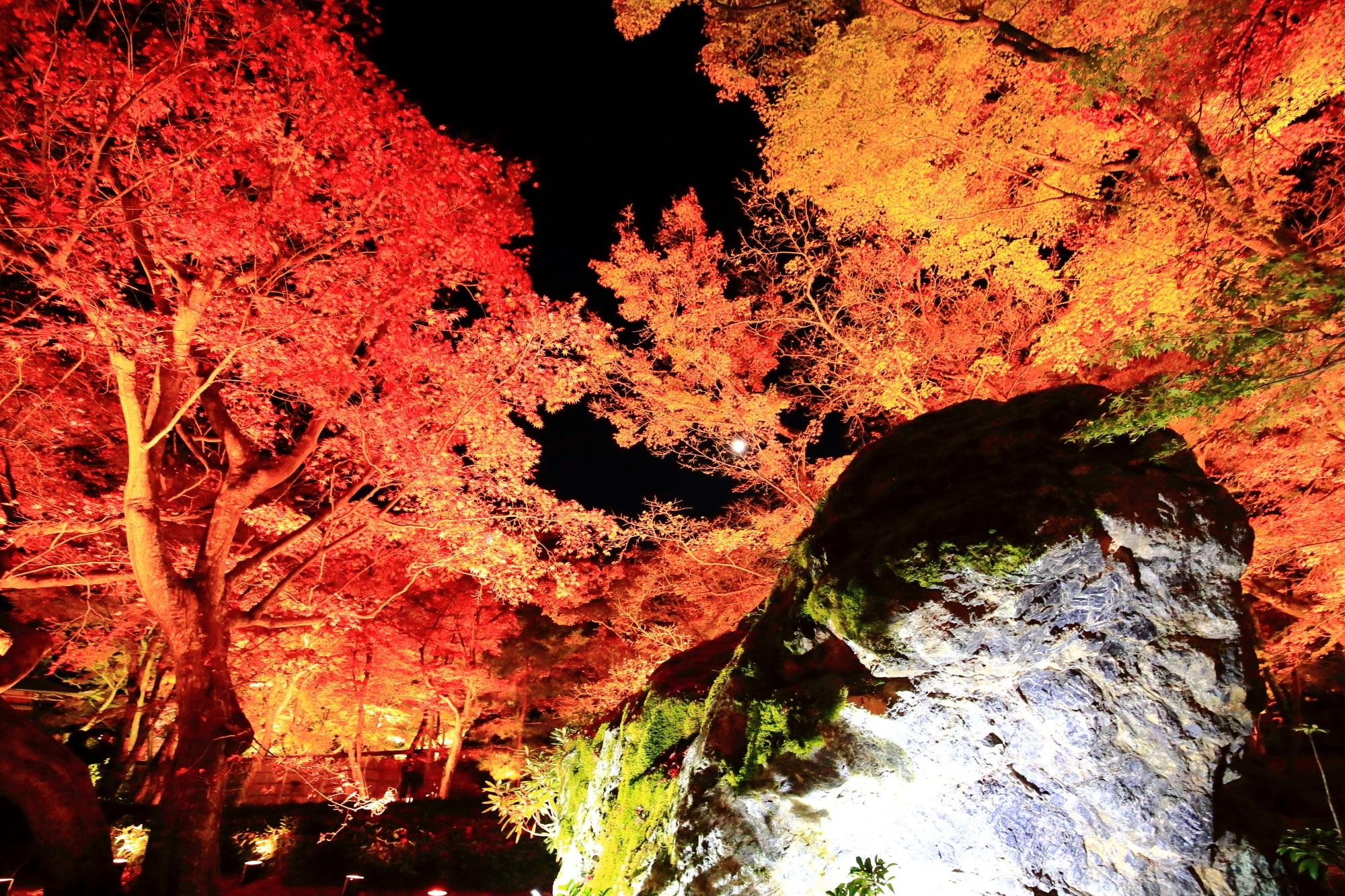嵐山のもみじの名所の宝厳院の獅子吼の庭の見ごろの綺麗な紅葉と獅子岩
